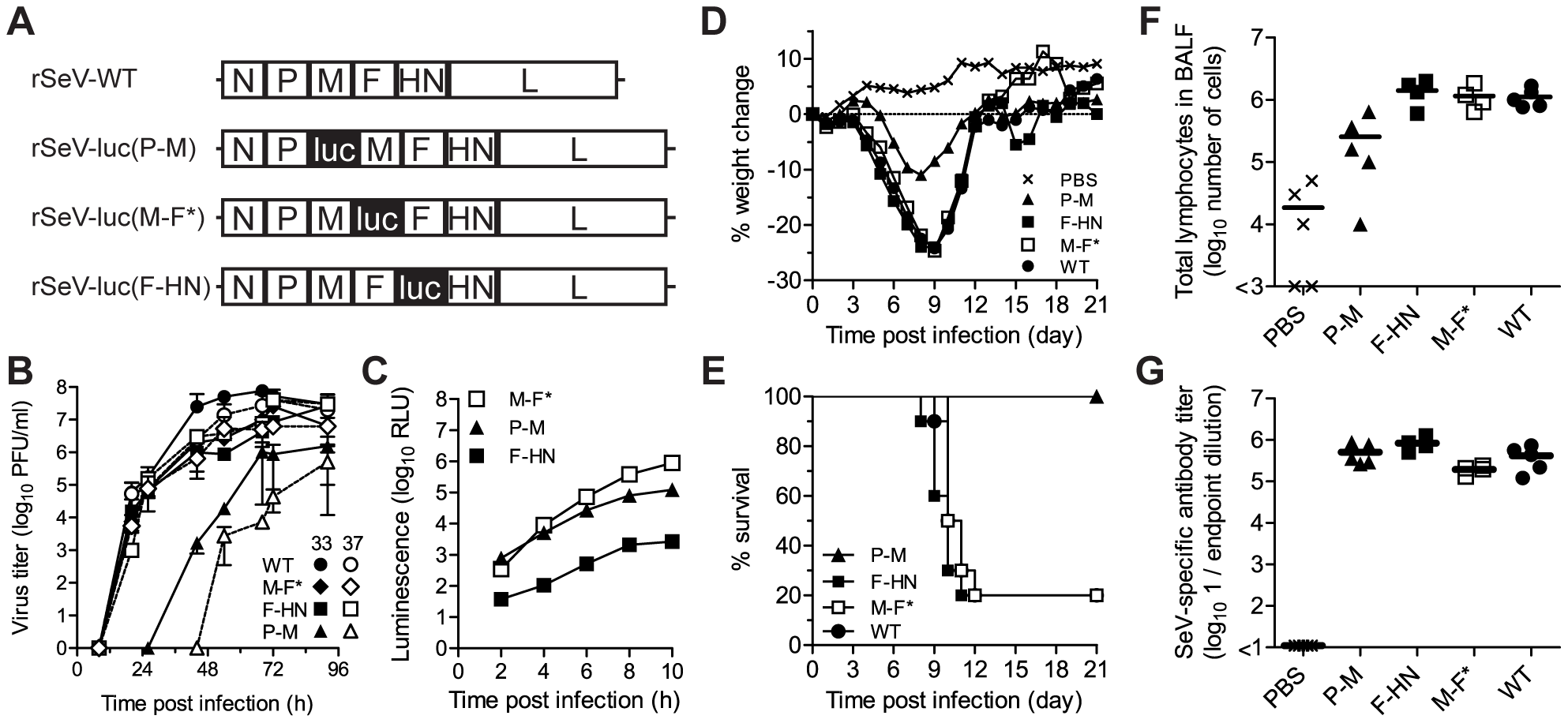 <i>In vitro</i> and <i>in vivo</i> phenotypes of luciferase-expressing Sendai viruses.
