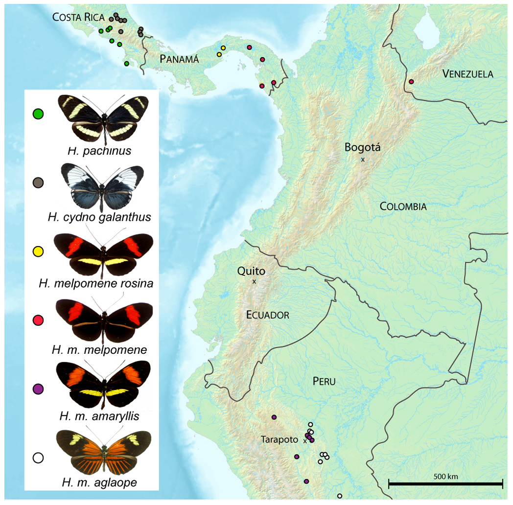 Locations of field collected samples used for population genetic analysis.