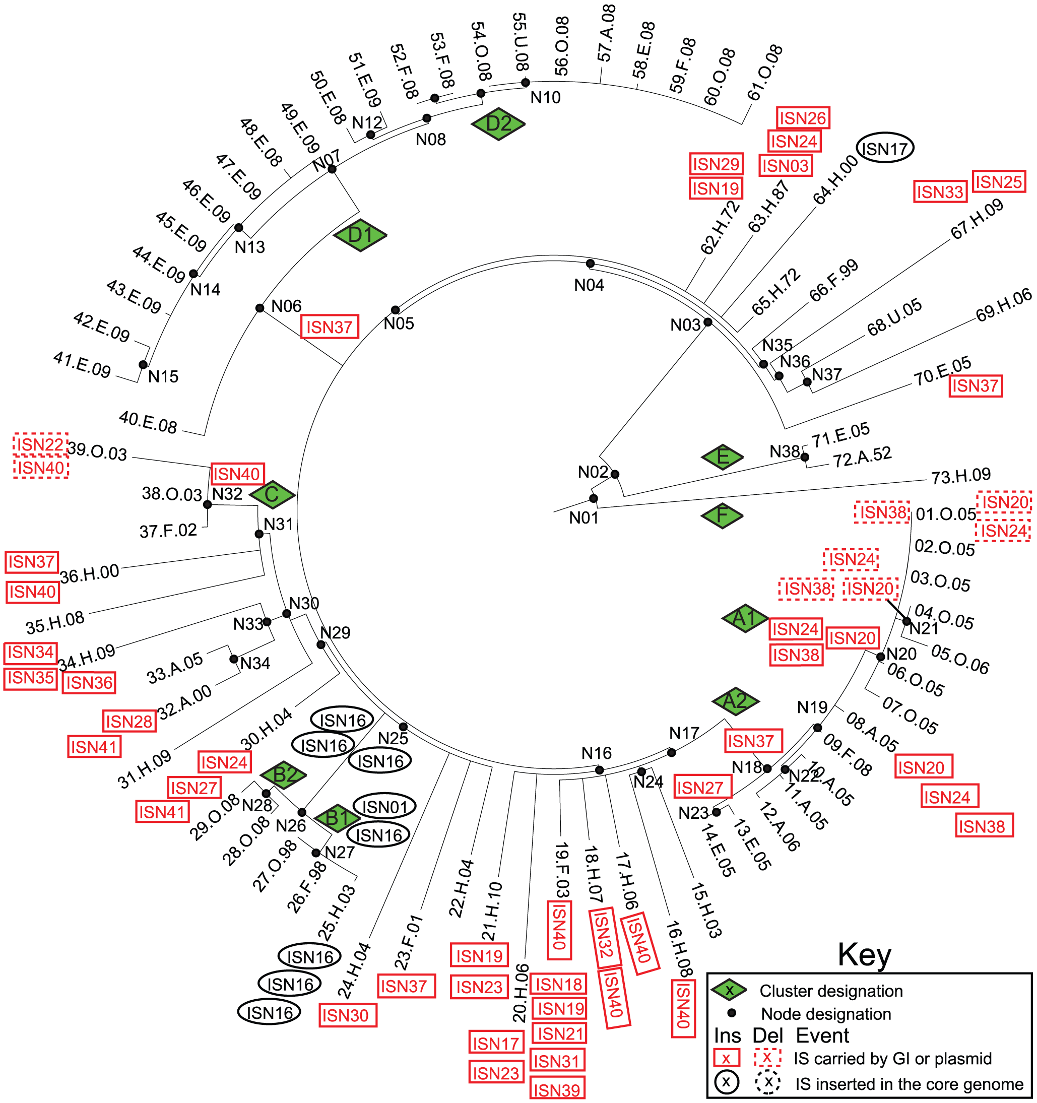 Insertions (solid lines) and deletions (dashed lines) of IS elements (<em class=&quot;ref&quot;>Tables S7</em>, <em class=&quot;ref&quot;>S8</em>, <em class=&quot;ref&quot;>S9</em>) in mobile elements (red boxes) or the core genome (black ellipses) mapped on a SNP genealogy of 73 Agona genomes.
