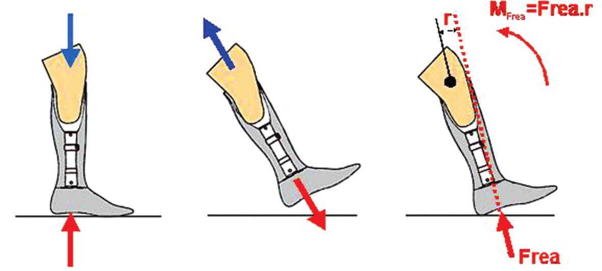 Pohyb pahýlu v protetickém lůžku ve stojné (a) a švihové (b) fázi kroku. Otáčivý účinek (M) reakční síly podložky (c) při kontaktu chodidla s podložkou.