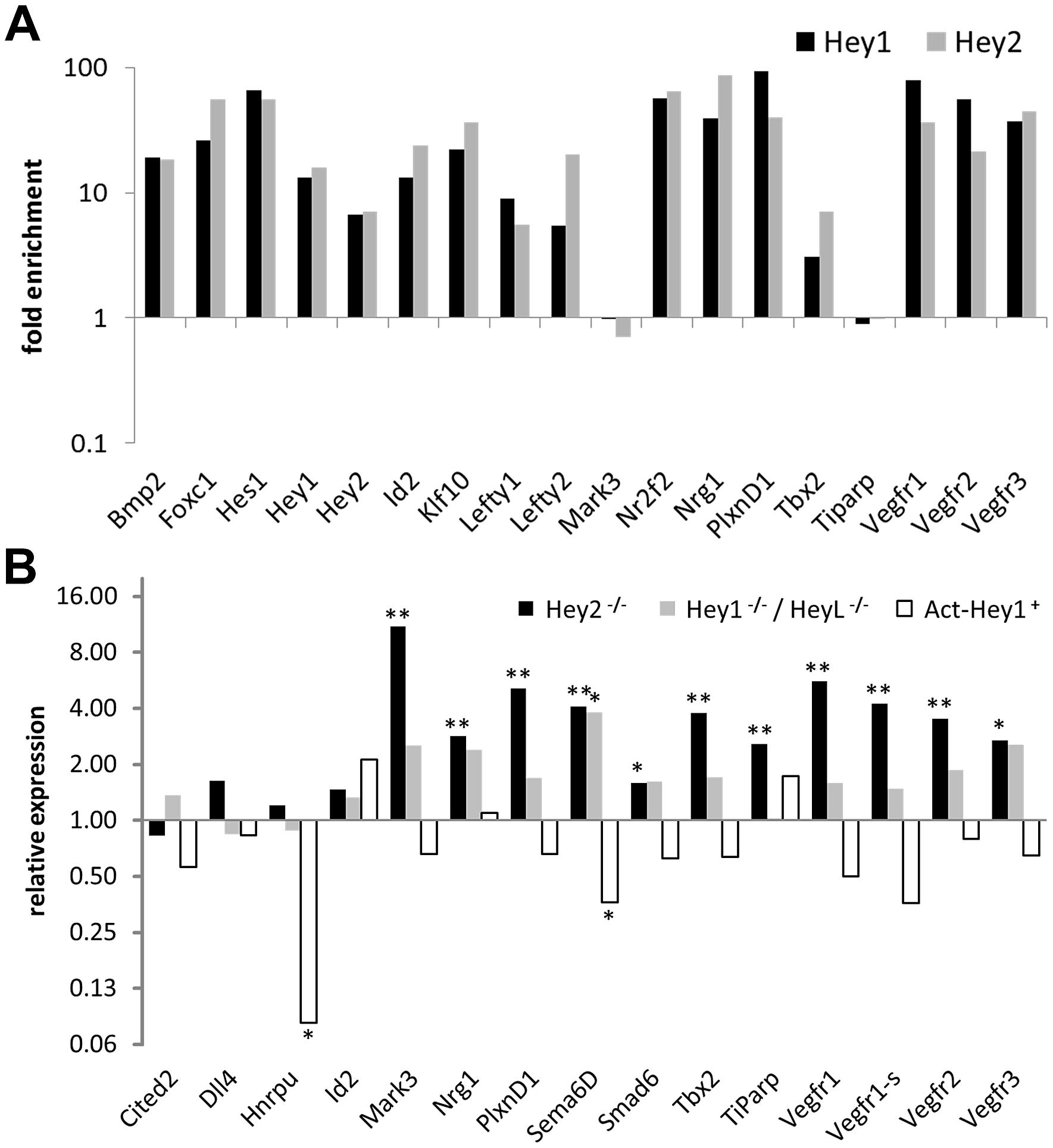 In vivo validation of HEY target genes.