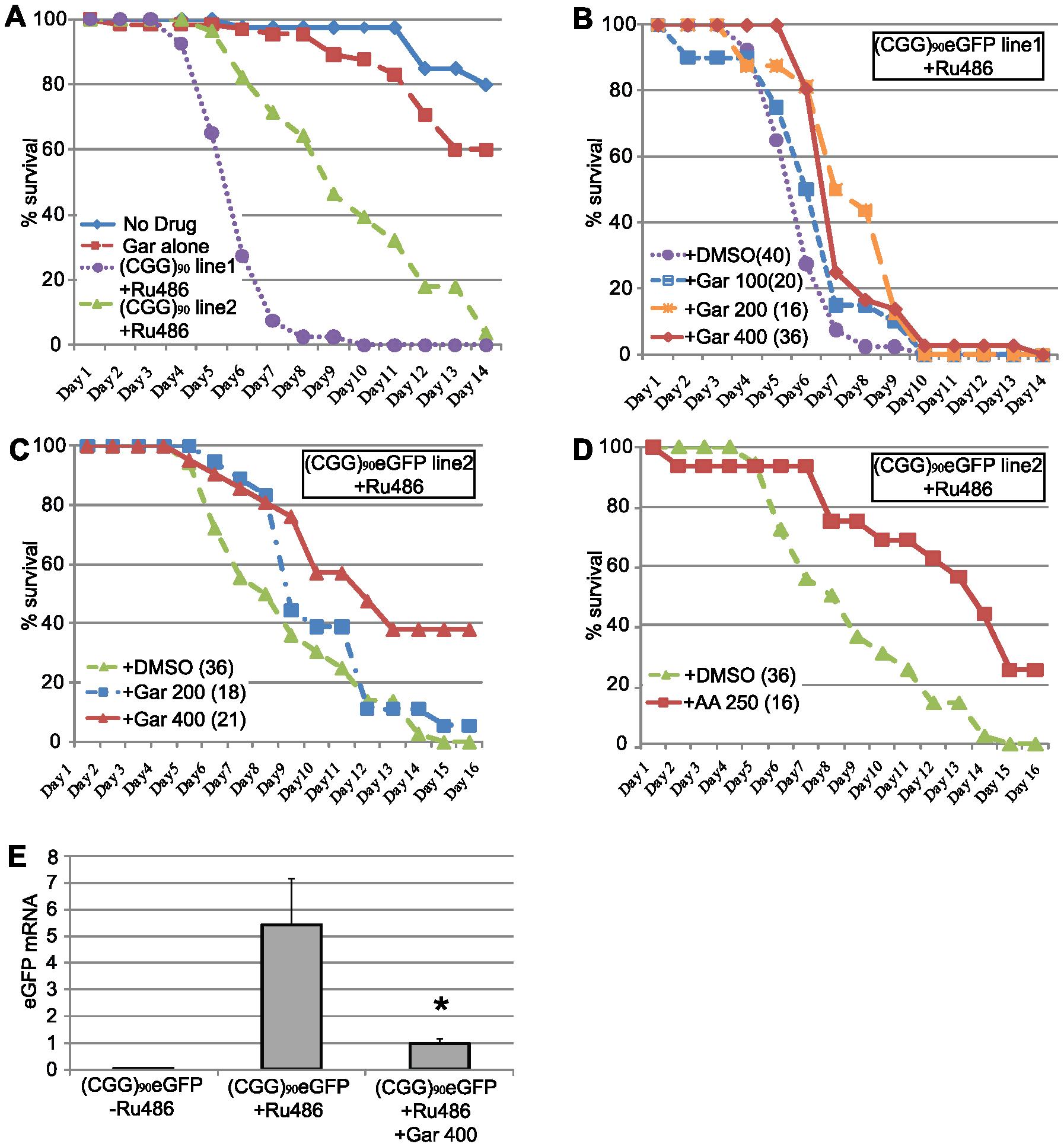 HAT inhibitors extend lifespan in adult (CGG)<sub>90</sub>-eGFP flies.