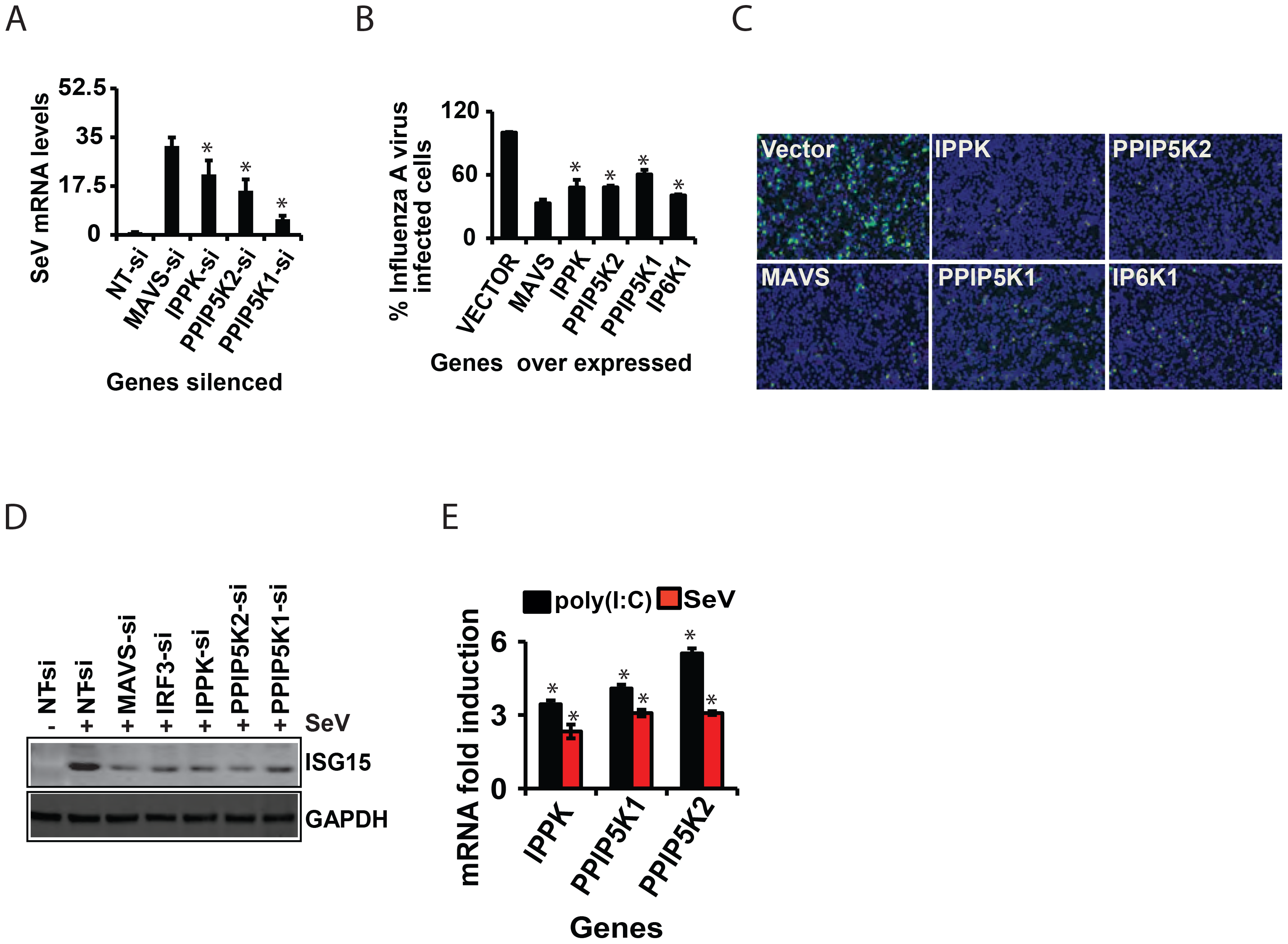 Inositol pyrophosphates synthesis pathway is required for cellular antiviral immunity.