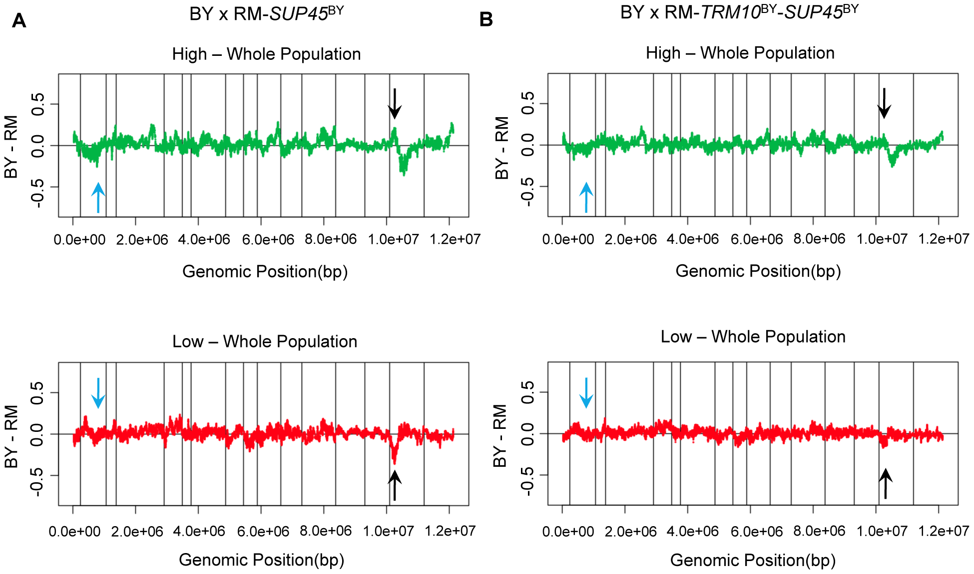 Polymorphisms in <i>TRM10</i> and <i>SUP45</i> explain readthrough difference between BY and RM.