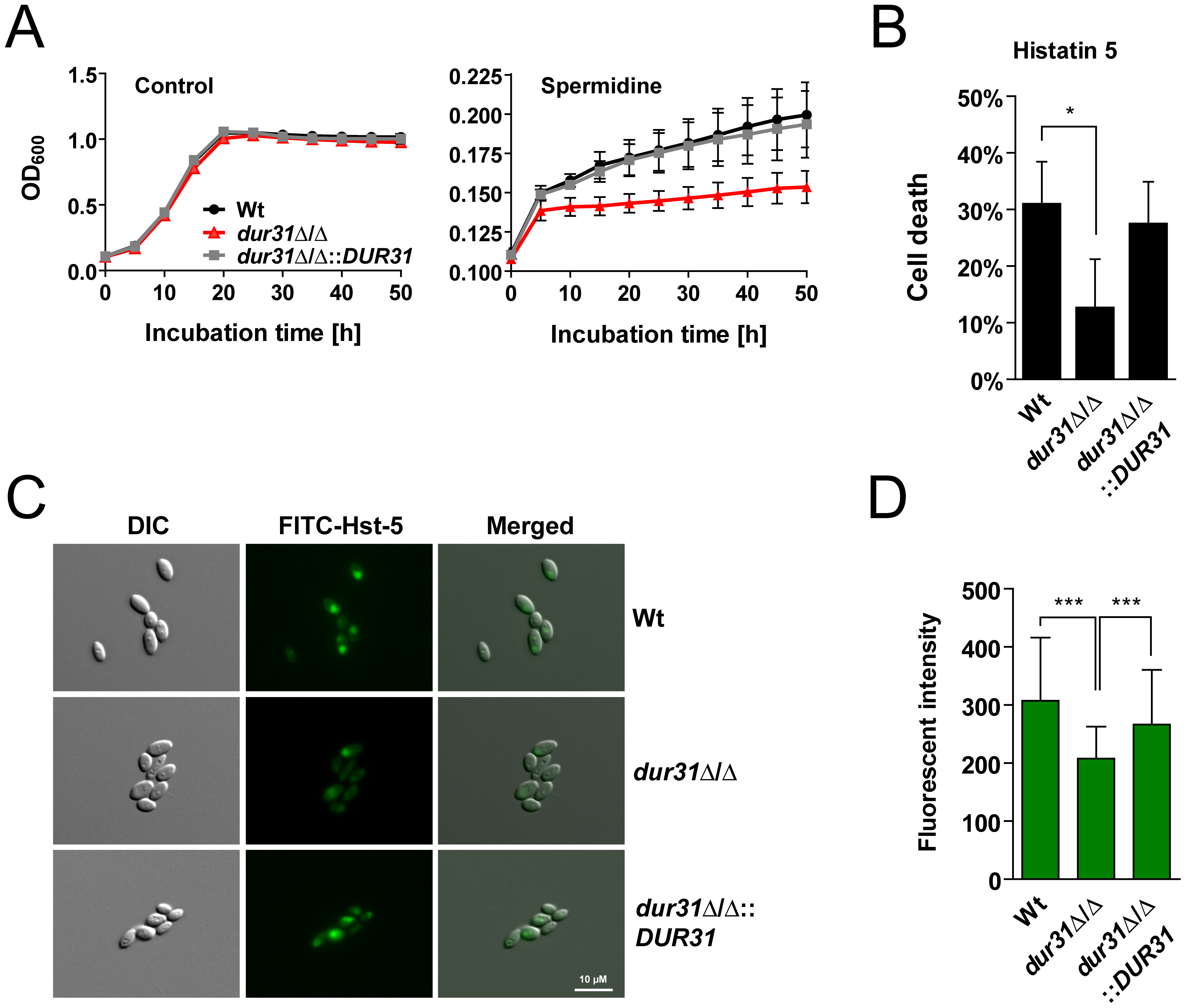 Dur31 mediates both spermidine assimilation and histatin 5 sensitivity.