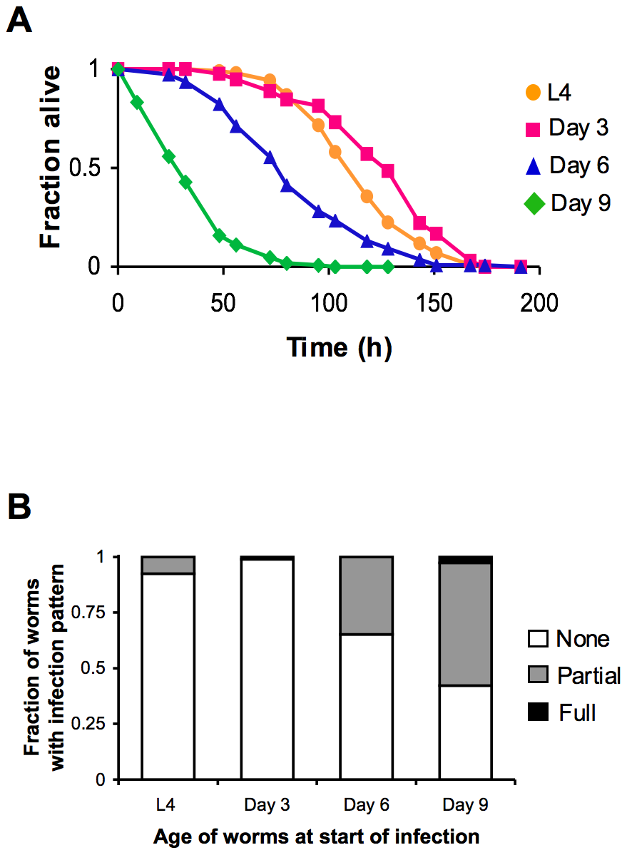 Increased susceptibility of <i>C. elegans</i> to lethal infection with aging.