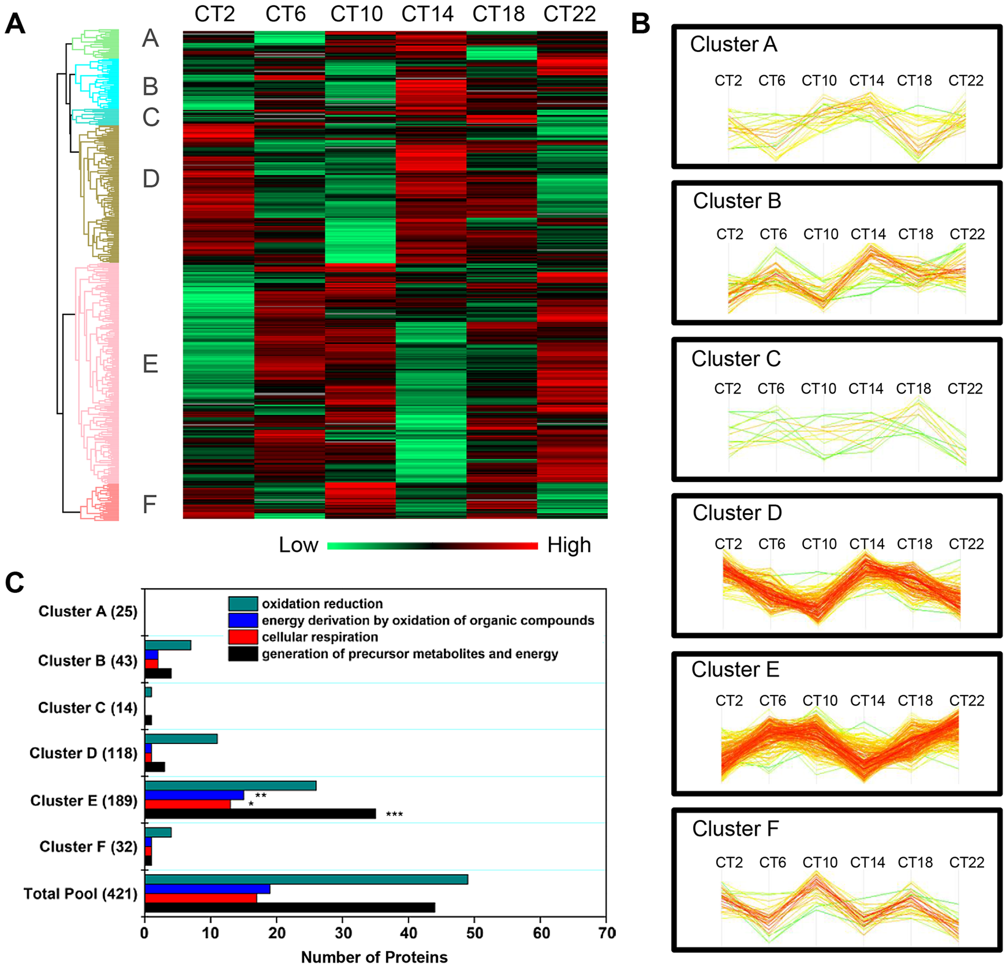 Cluster analysis of the time-of-day-dependent SCN proteome.