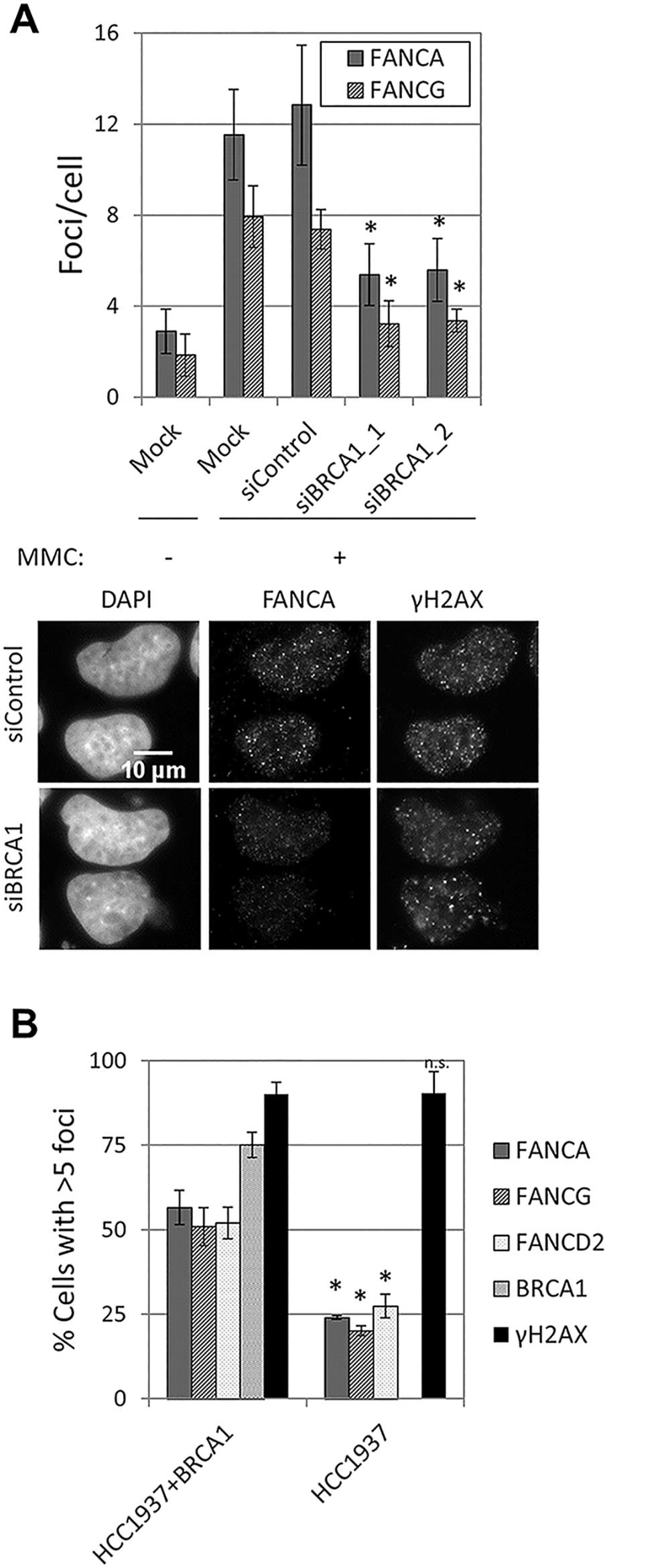BRCA1 is required for FA core complex foci formation.