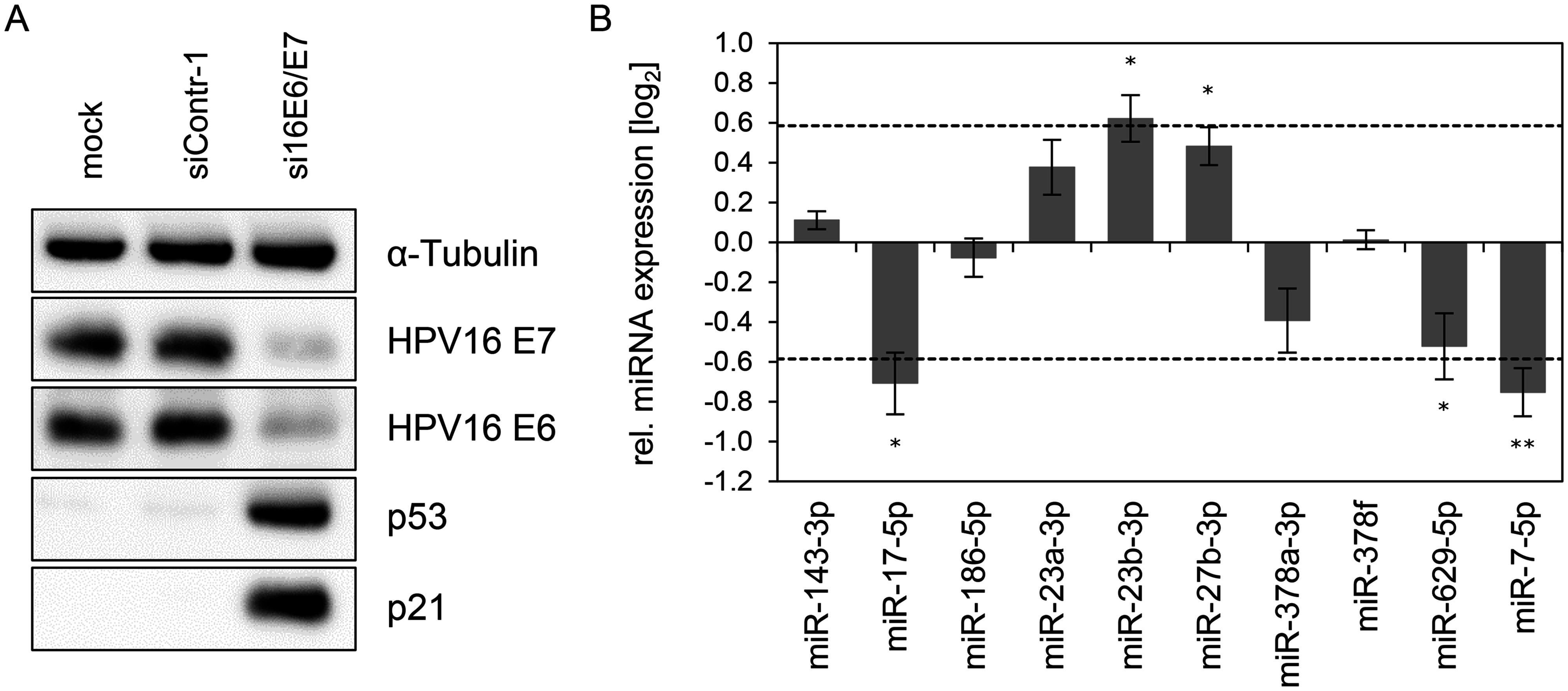 Inhibition of endogenous HPV16 <i>E6/E7</i> expression: Effects on selected intracellular miRNAs.