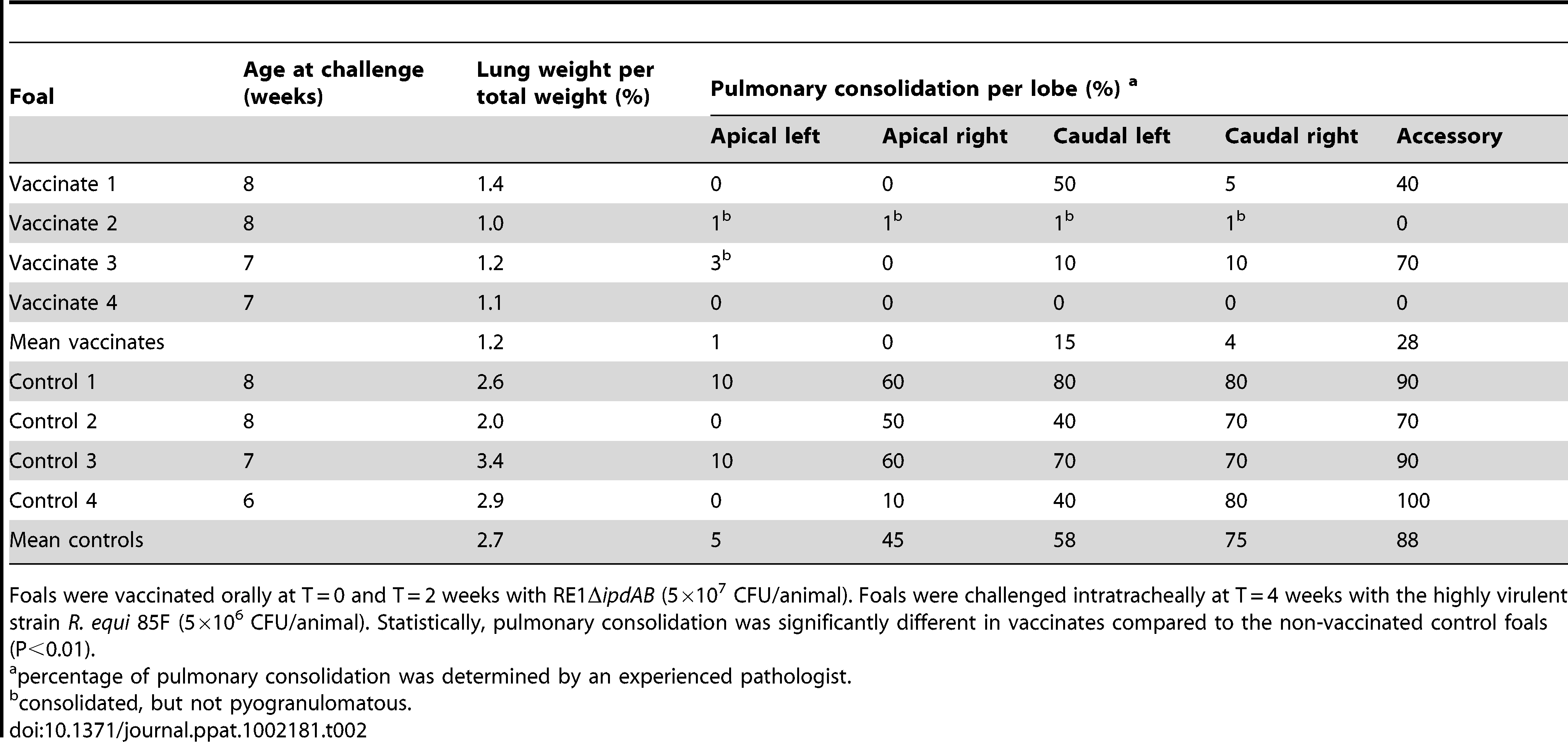 Lung weights and percentage pulmonary consolidation per lobe of vaccinated and unvaccinated (control) 2 to 4-week-old foals (n = 4).