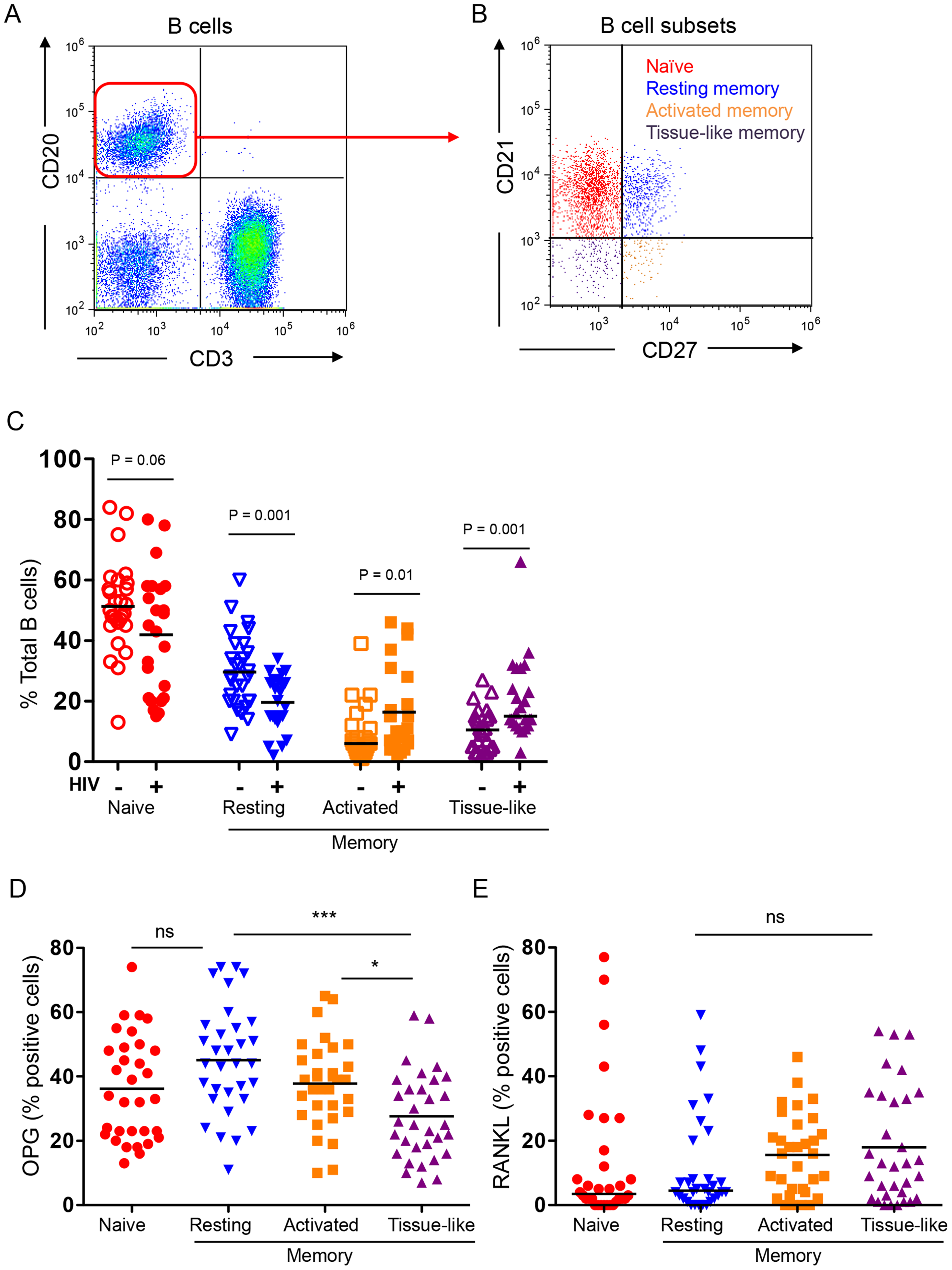 B cell subset RANKL and OPG expression in HIV-negative and HIV-positive individuals.