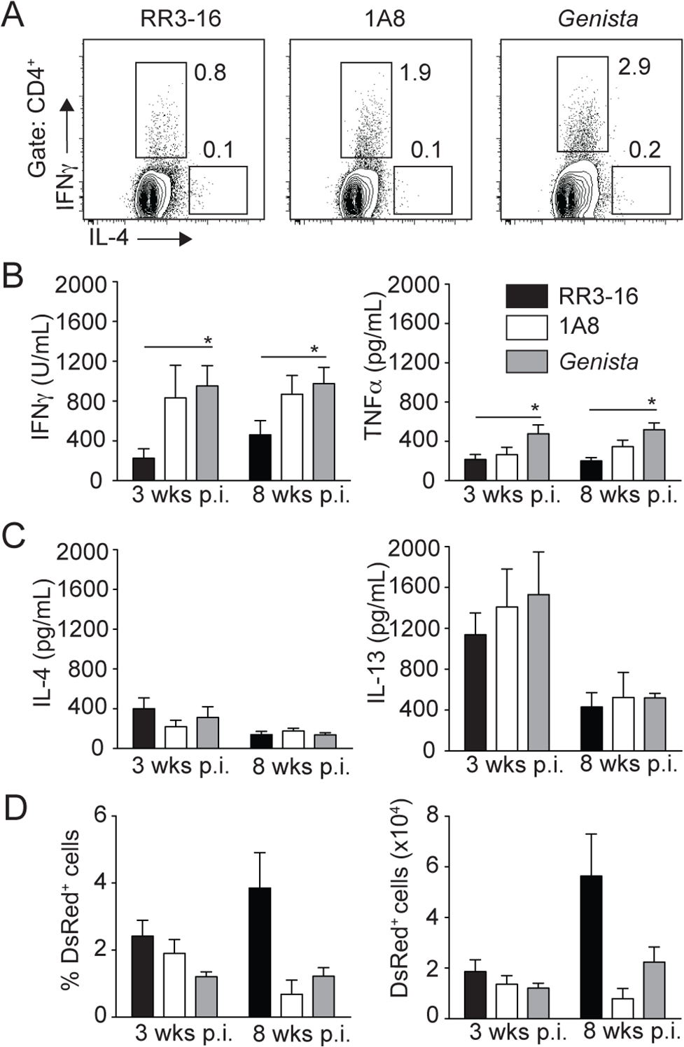 Early absence of neutrophils allows the development of <i>L</i>. <i>mexicana</i>-specific Th1 cells.