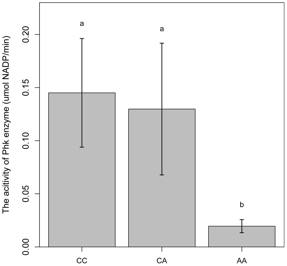 Comparison of PhK enzyme activities in longissimus muscle of animals with different <i>PHKG1</i> g.8283 A&gt;C genotypes.