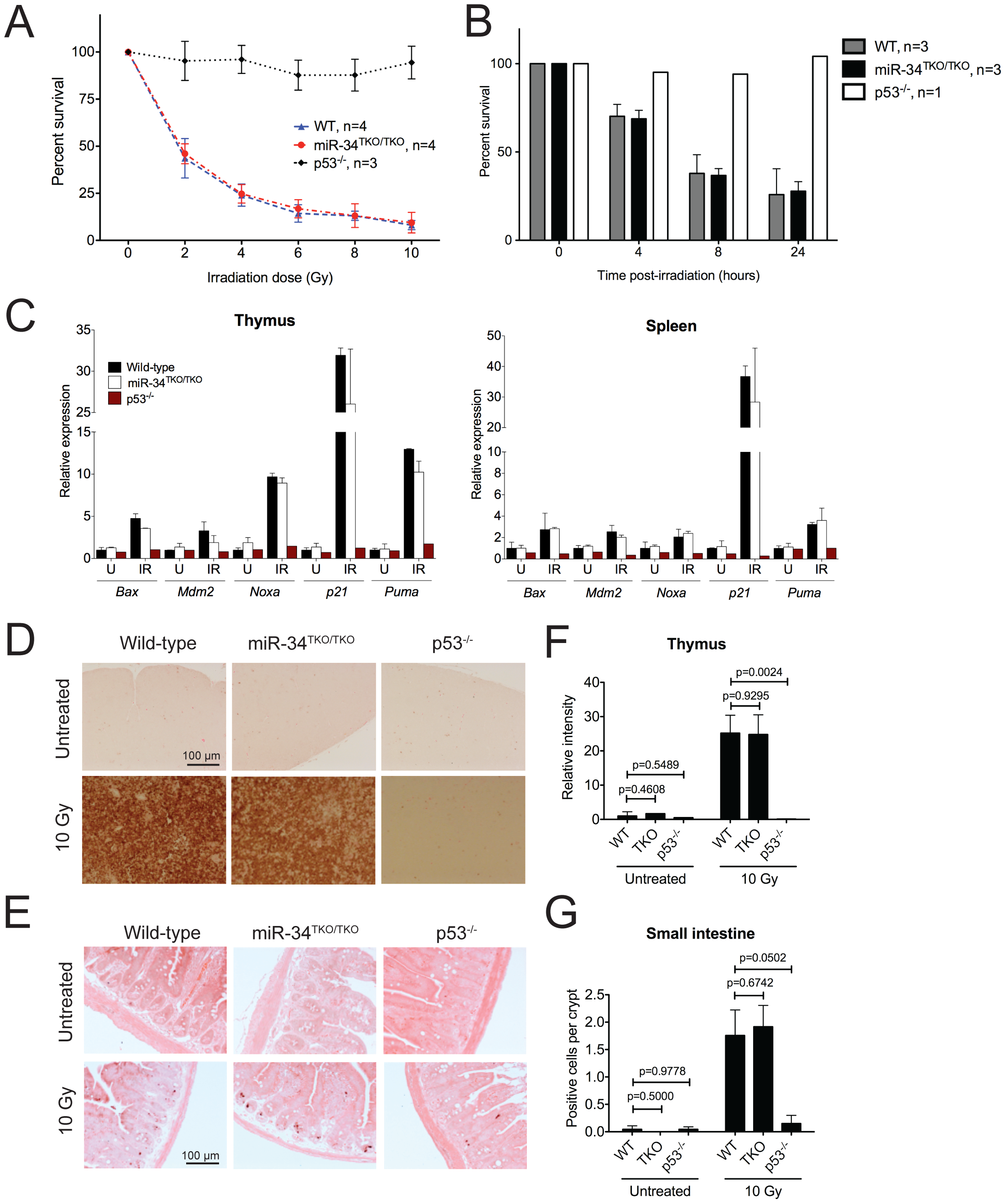 p53-dependent apoptosis in thymocytes and <i>in vivo</i>.
