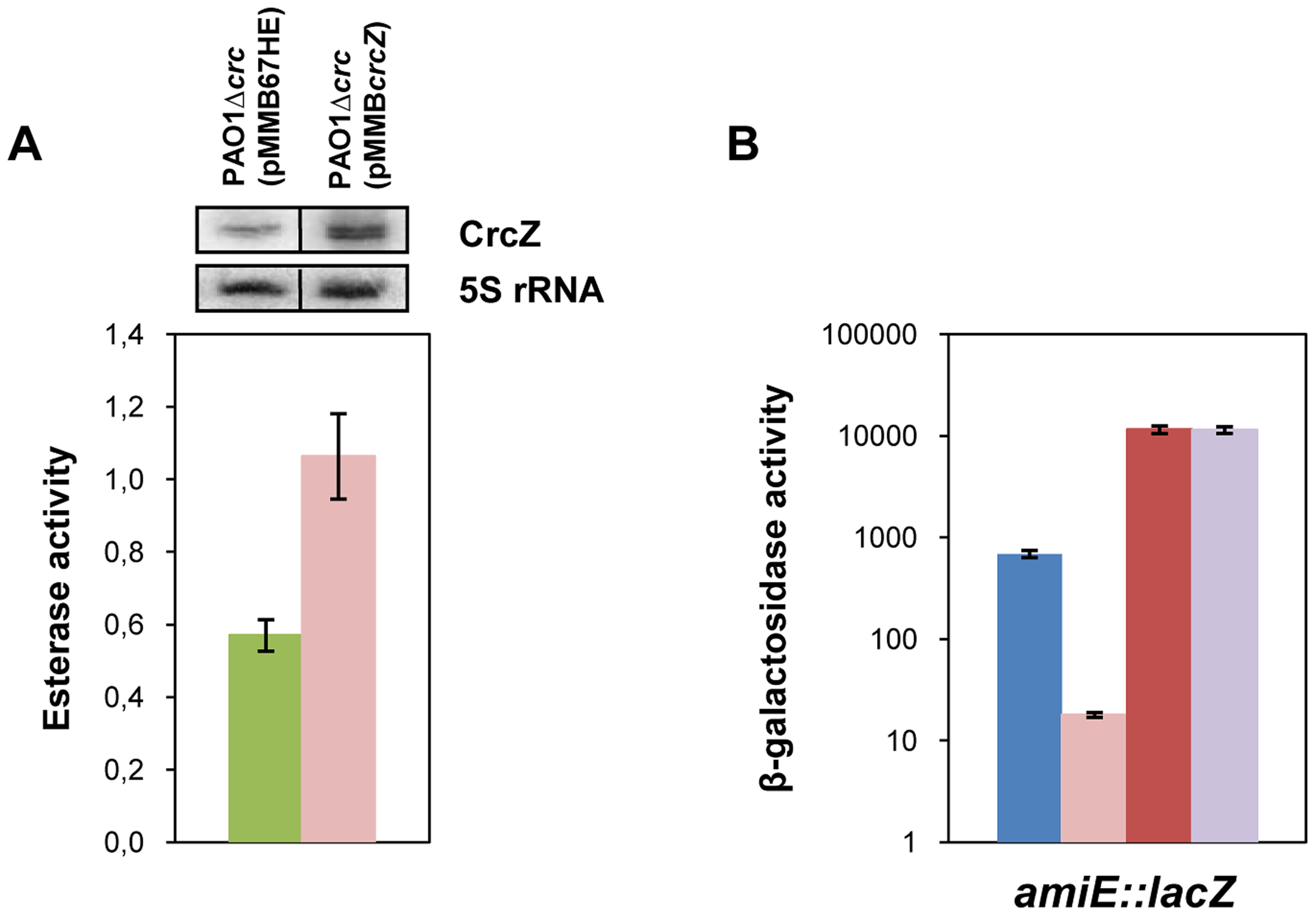 CrcZ relieves repression by Hfq <i>in vivo</i>.