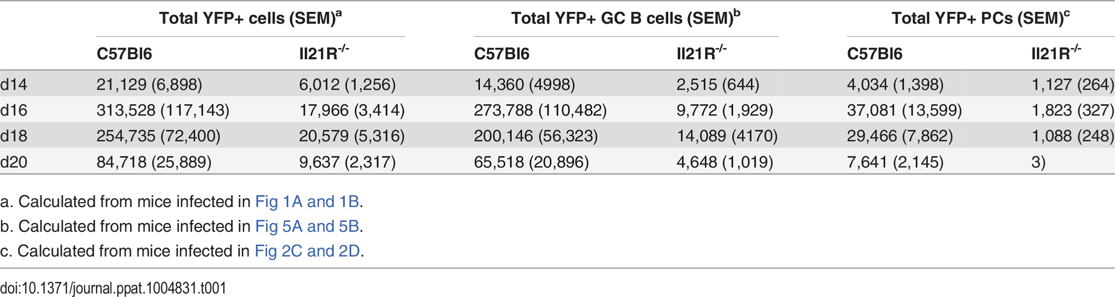 Average number of YFP<sup>+</sup> cells per spleen.