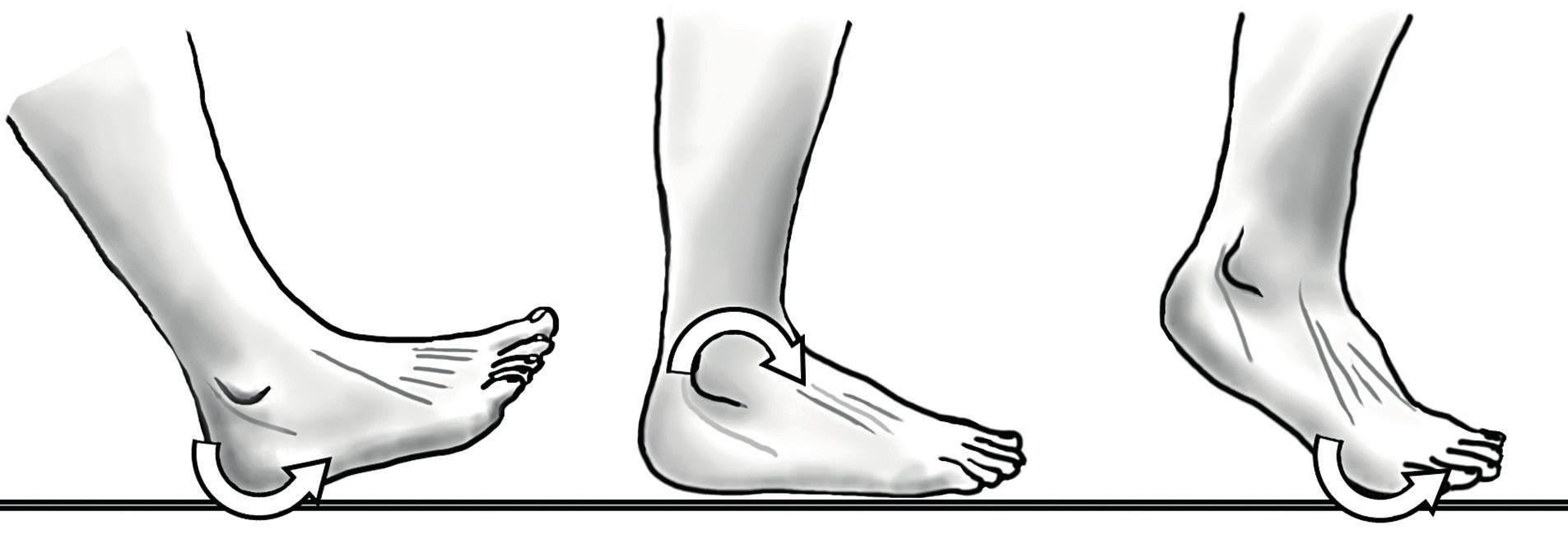 """Model tří kolébek (""""rockers"""") krokového cyklu; první zhoupnutí (patní) – dopad paty při úvodním kontaktu s podložkou; druhé (hlezenní) zhoupnutí – noha je zatížením fixována k podložce, bérec se vzhledem k ní posunuje vpřed; třetí zhoupnutí (kolem hlaviček MTT) – bérec se i nadále pohybuje vpřed, zvedá se pata, dochází k dorzální flexi přednoží a plantární flexi v hleznu."""