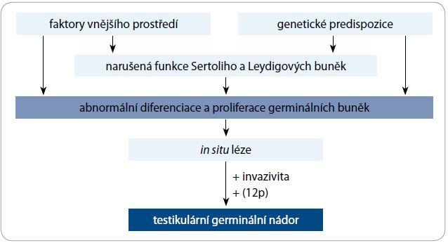Schéma 1. Vývoj TGCT a faktory na něm se podílející.