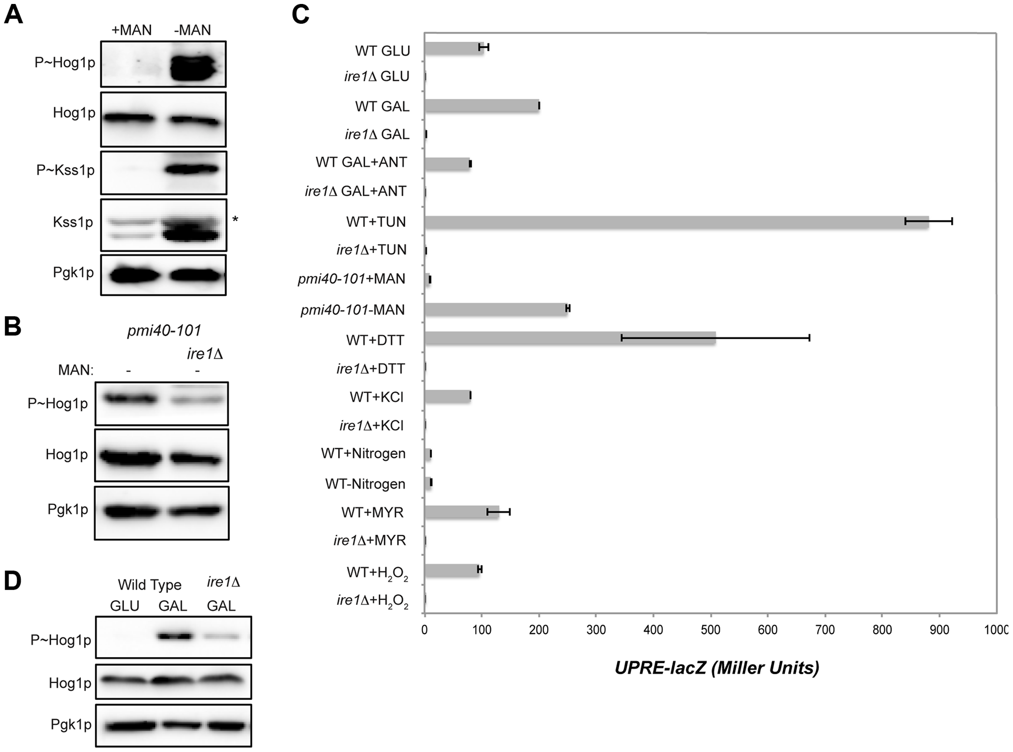 Role of the UPR in mediating HOG pathway activation during growth in galactose and in response to protein glycosylation deficiency.