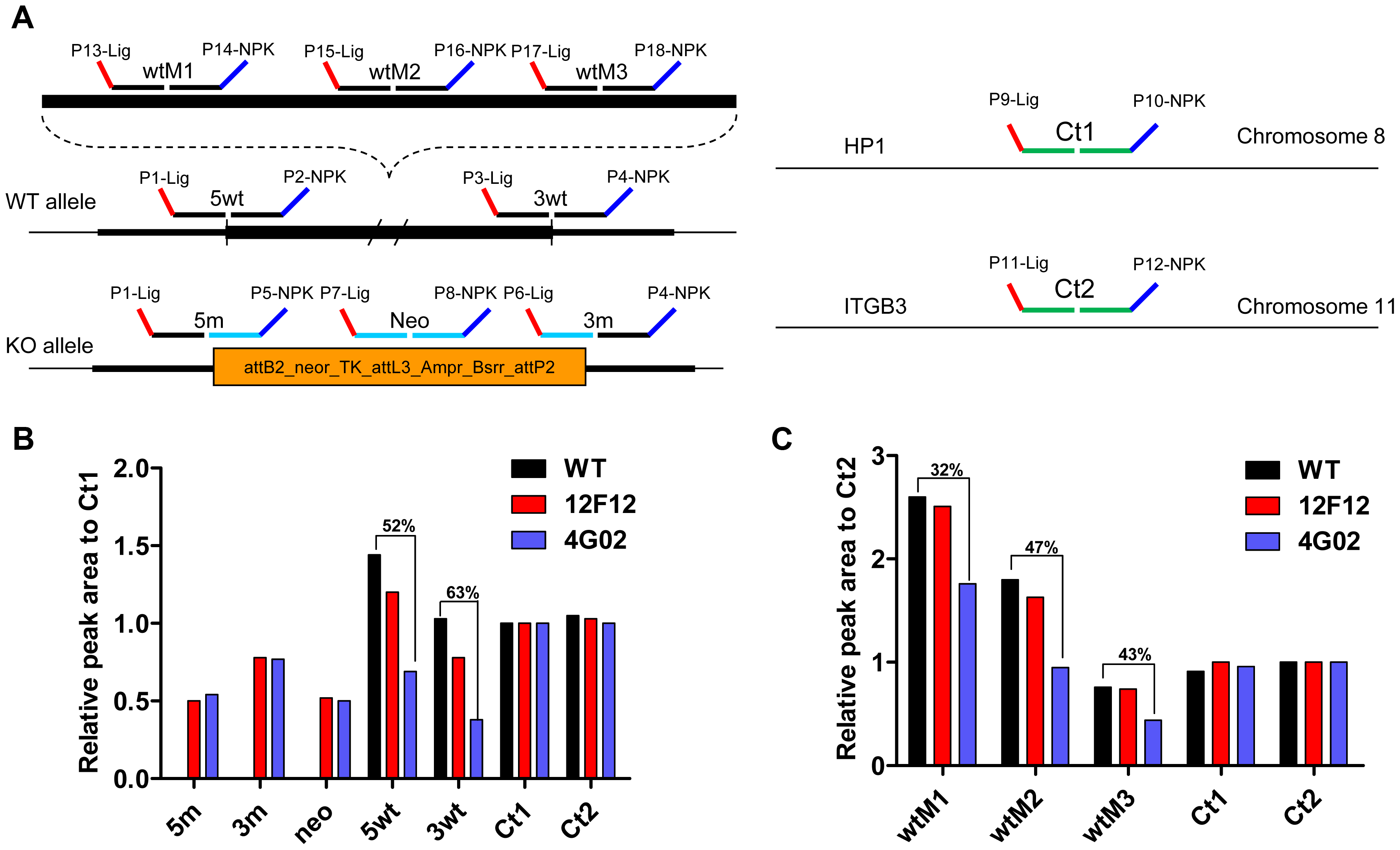 Analysis of ES clones by multiplex ligation-dependent probe amplification (MLPA).
