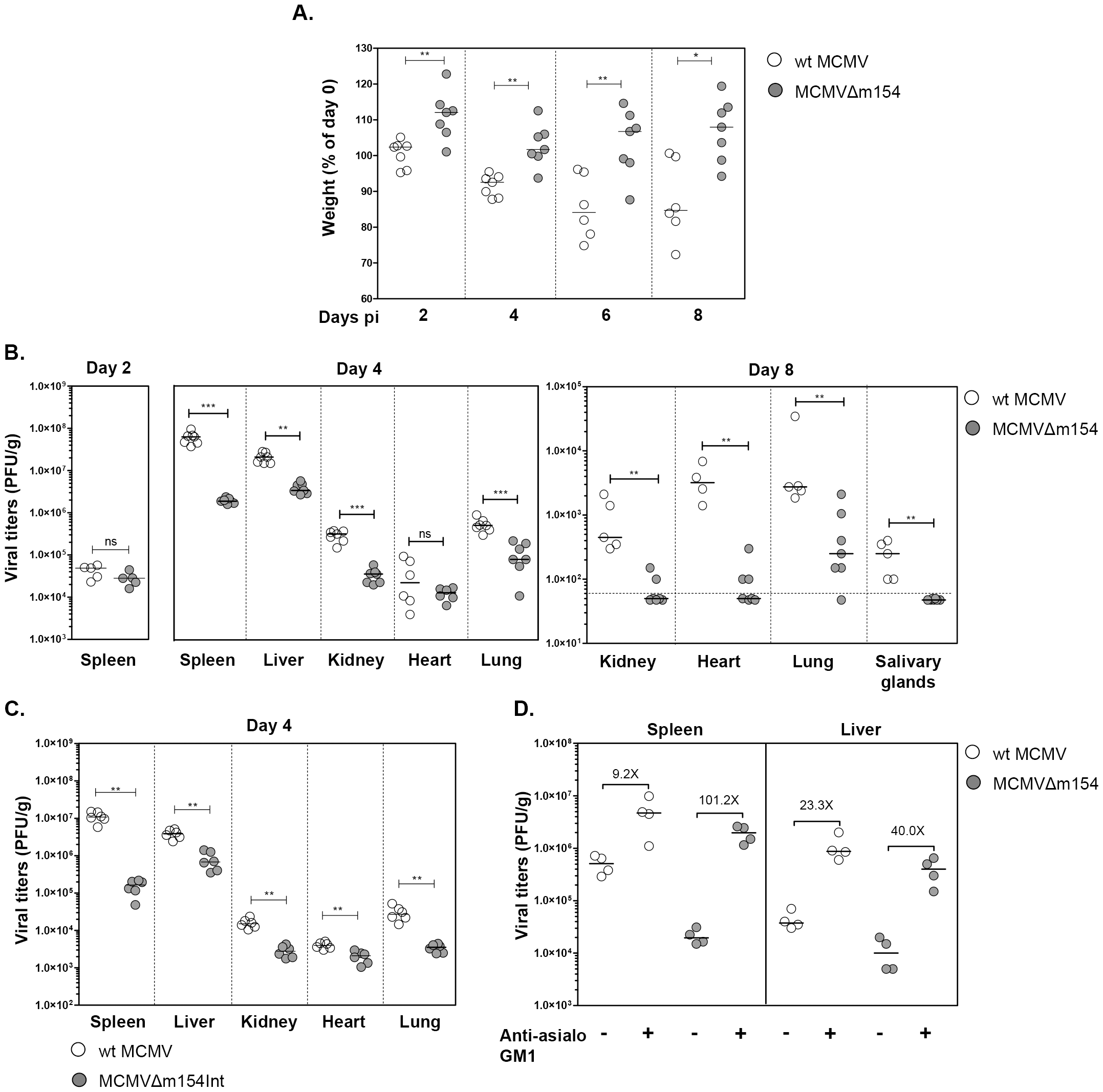 <i>In vivo</i> attenuation of MCMVΔm154 in an NK cell-dependent manner.