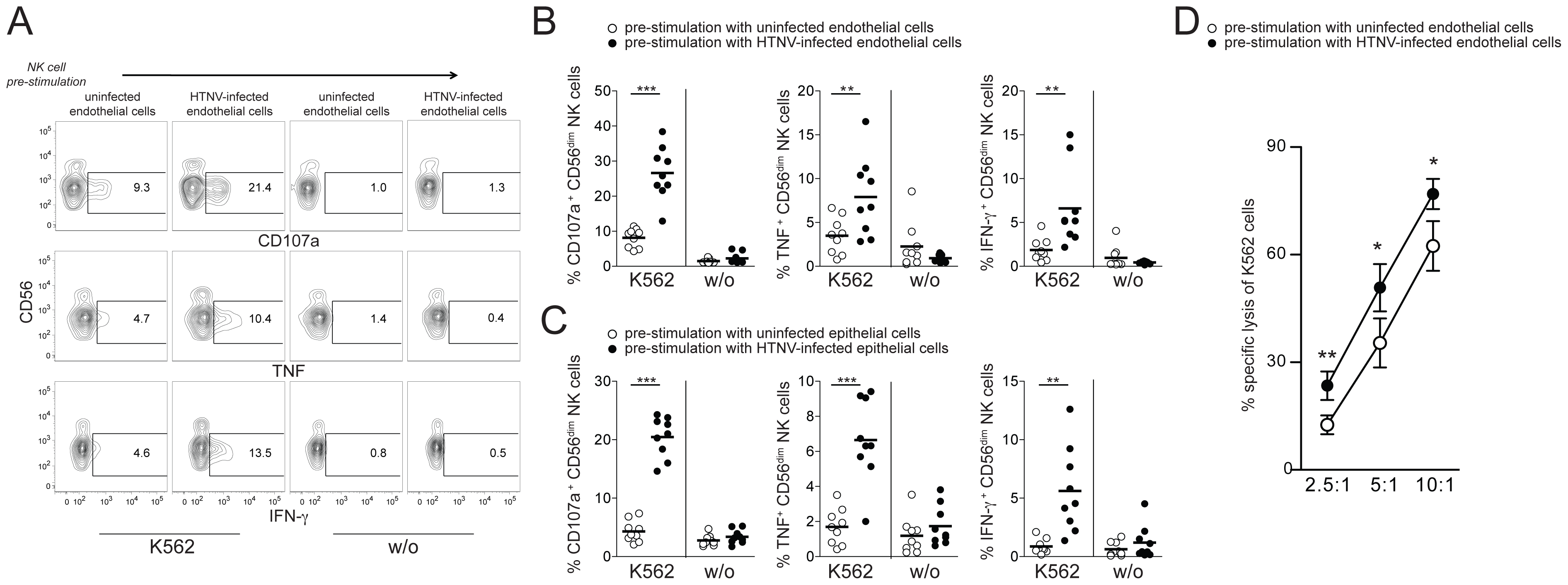 CD56<sup>dim</sup> NK cells acquire increased functional capacity after contact with hantavirus-infected cells.