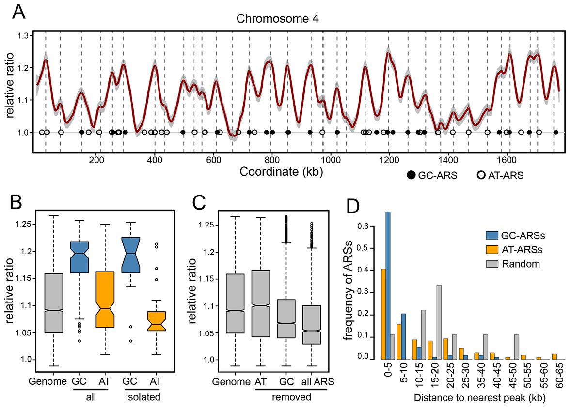 Replication timing of the <i>P. pastoris</i> genome.