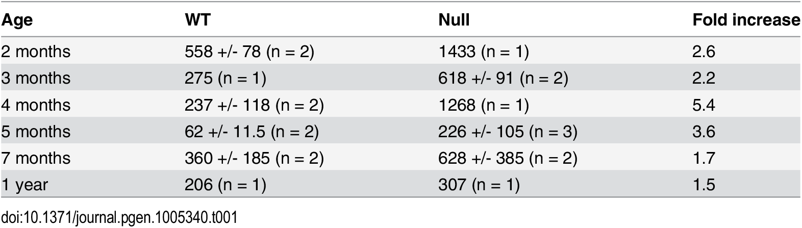 Creatine kinase activities in blood samples from wildtype and <i>Fbn2</i> null mice.