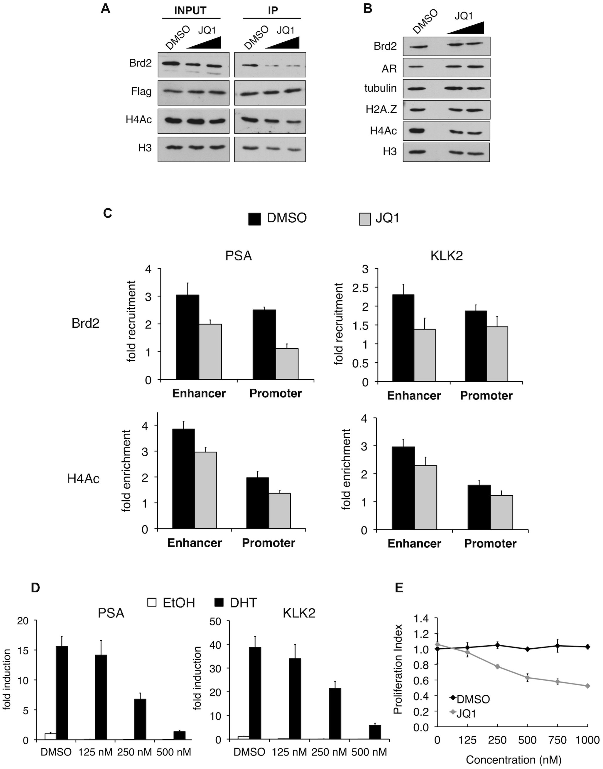 In vitro and in vivo effects of bromodomain inhibition by JQ1 treatment.