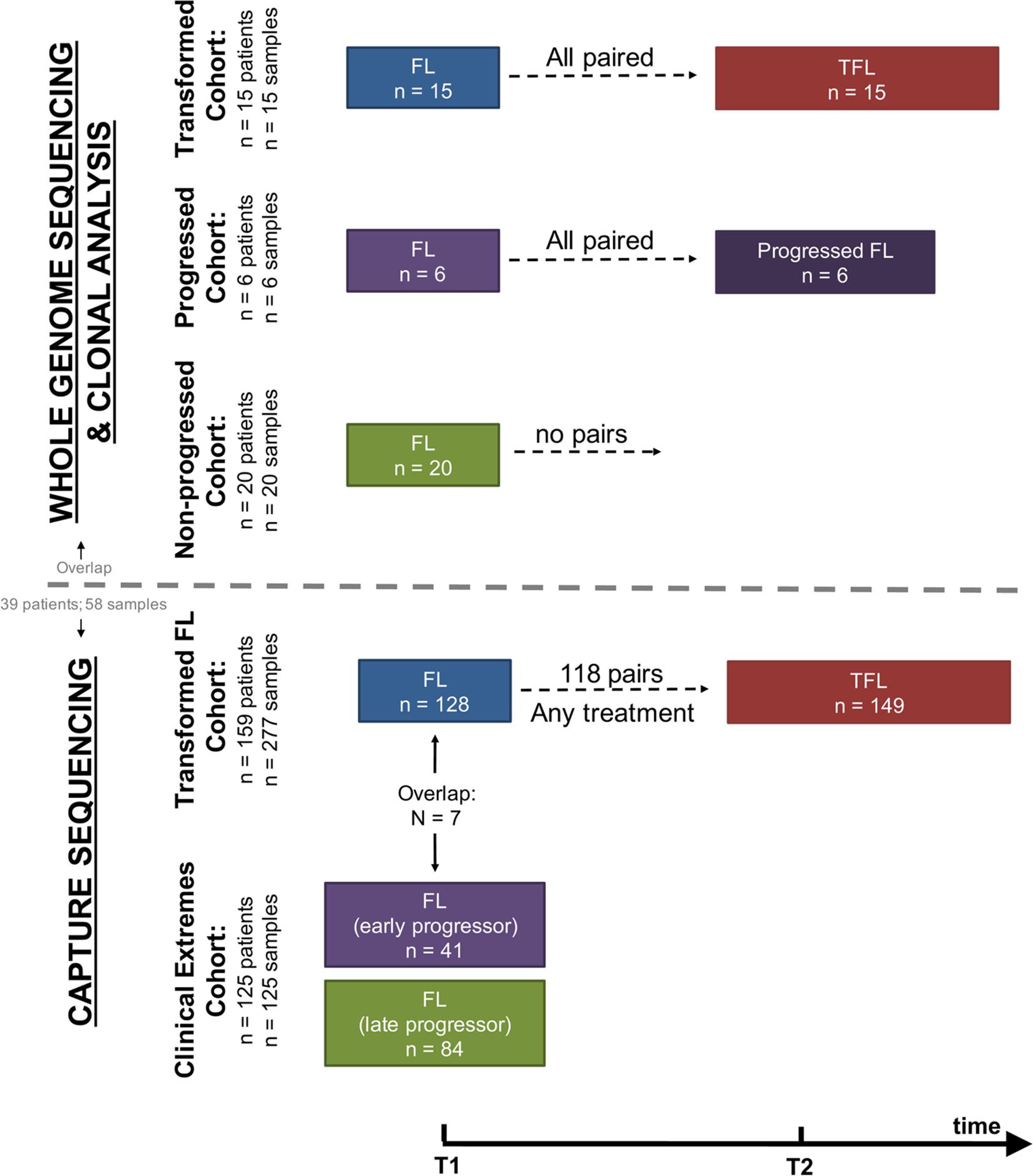 Study cohort overview.