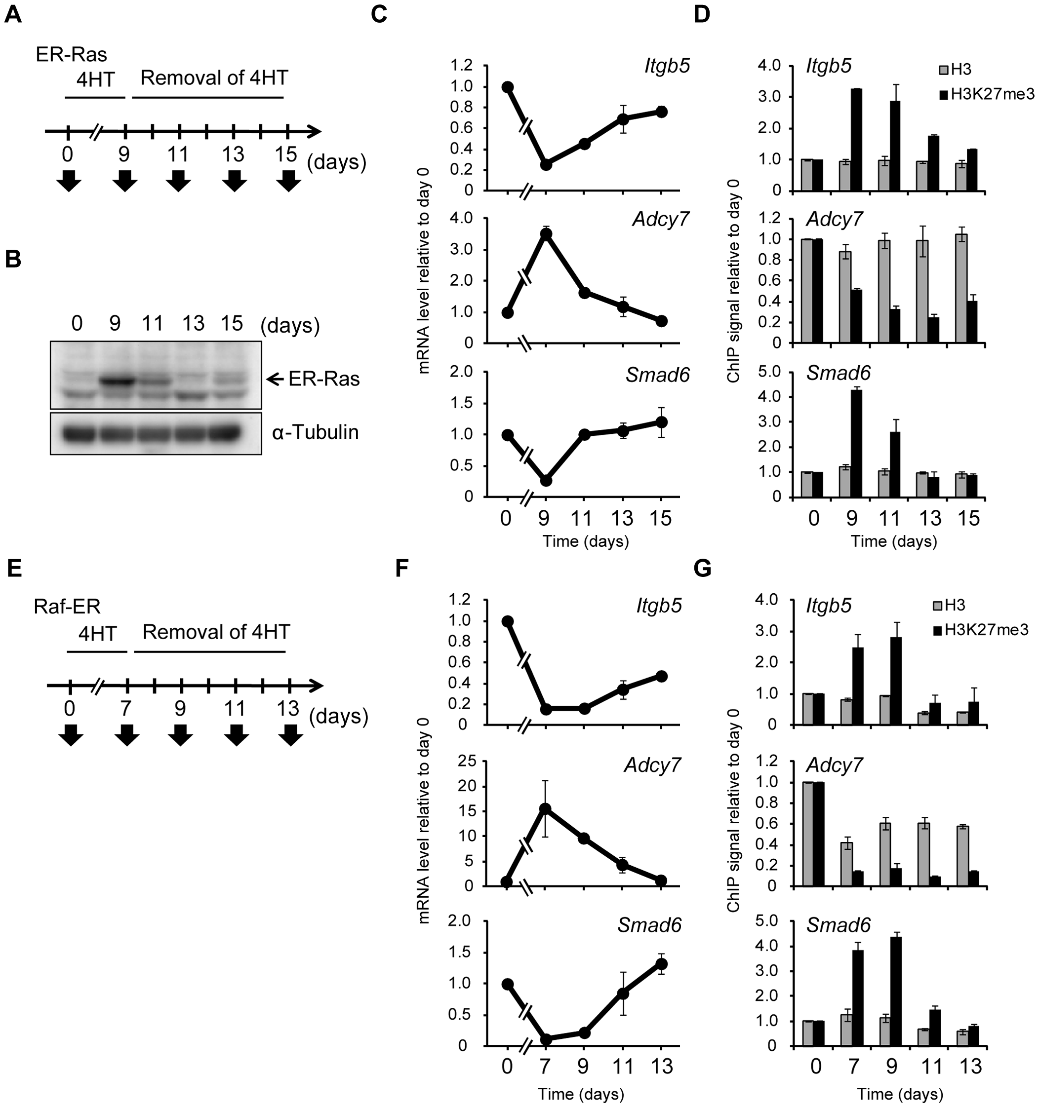 Ras-induced H3K27me3 accumulation and transcriptional changes are reversed by inactivation of Ras signaling.