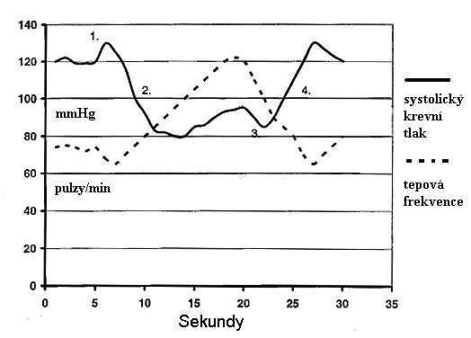 Fyziologická odpověď na Valsalvův manévr (zdroj: veřejná doména, upraveno autorem)