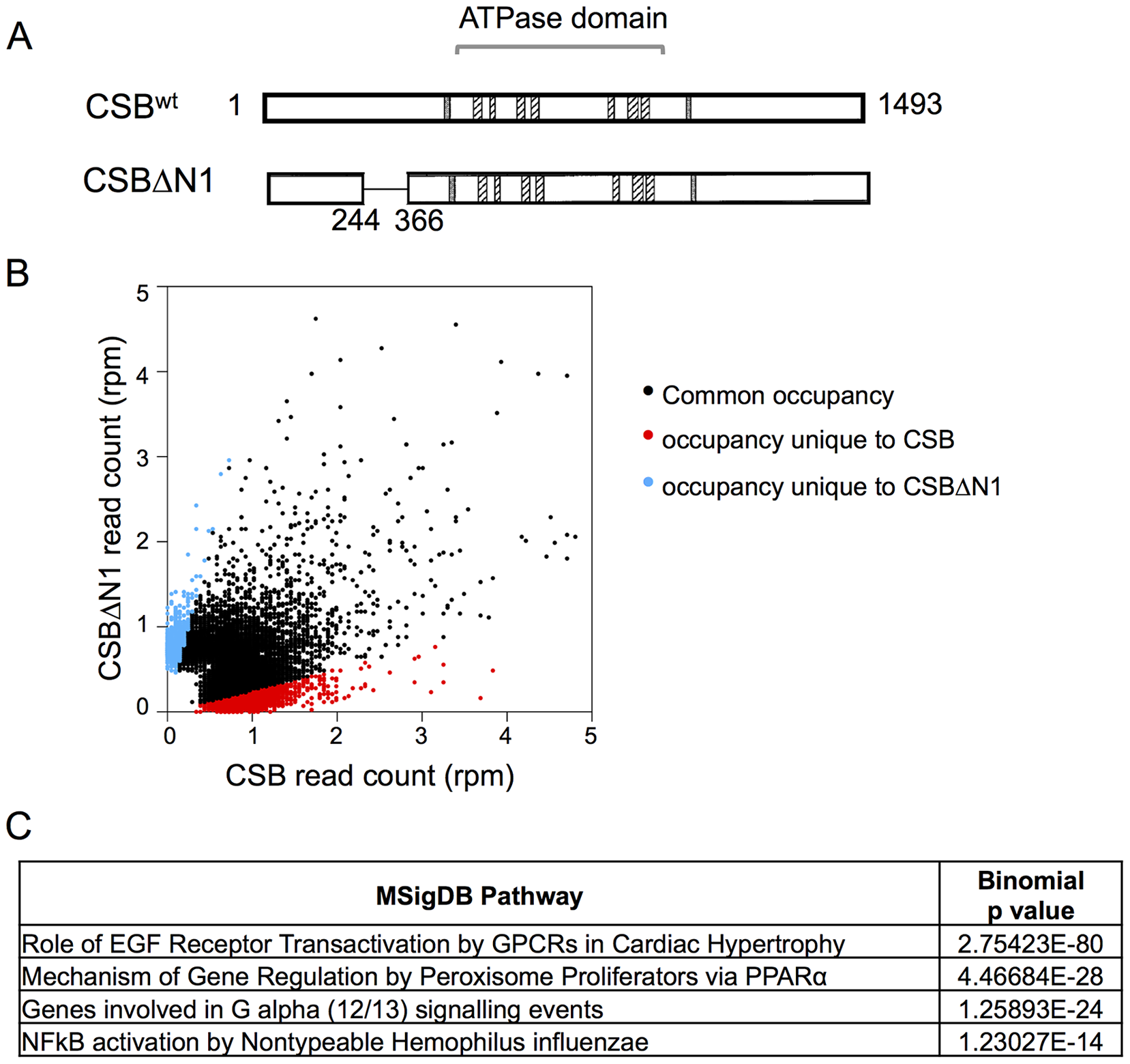 Overview of CSB and CSBΔN1 ChIP-seq data.