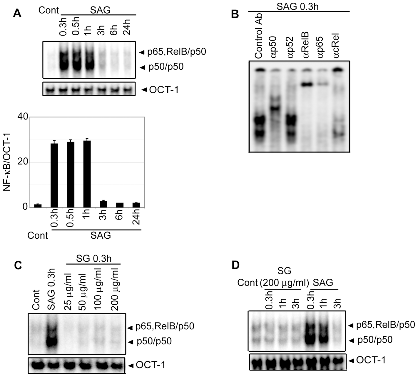 Stimulation with SAG increases nuclear NF-κB DNA binding activity in BMDCs.