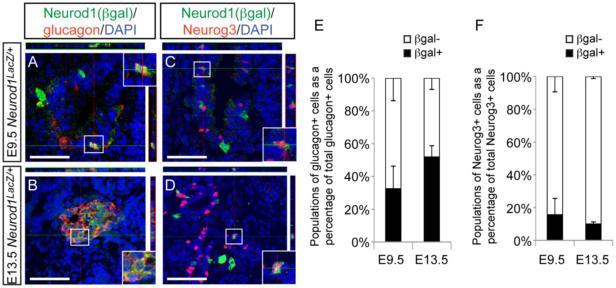Neurod1 is expressed in a subset of endocrine progenitor cells.