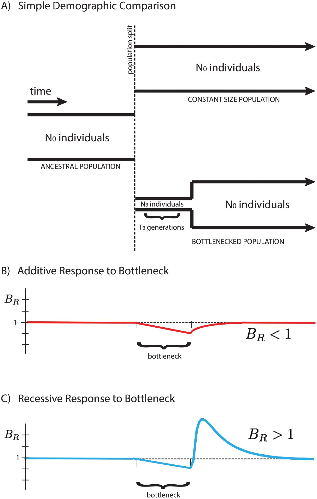 Response of the <i>B</i><sub><i>R</i></sub> statistic for additive and recessive variation.