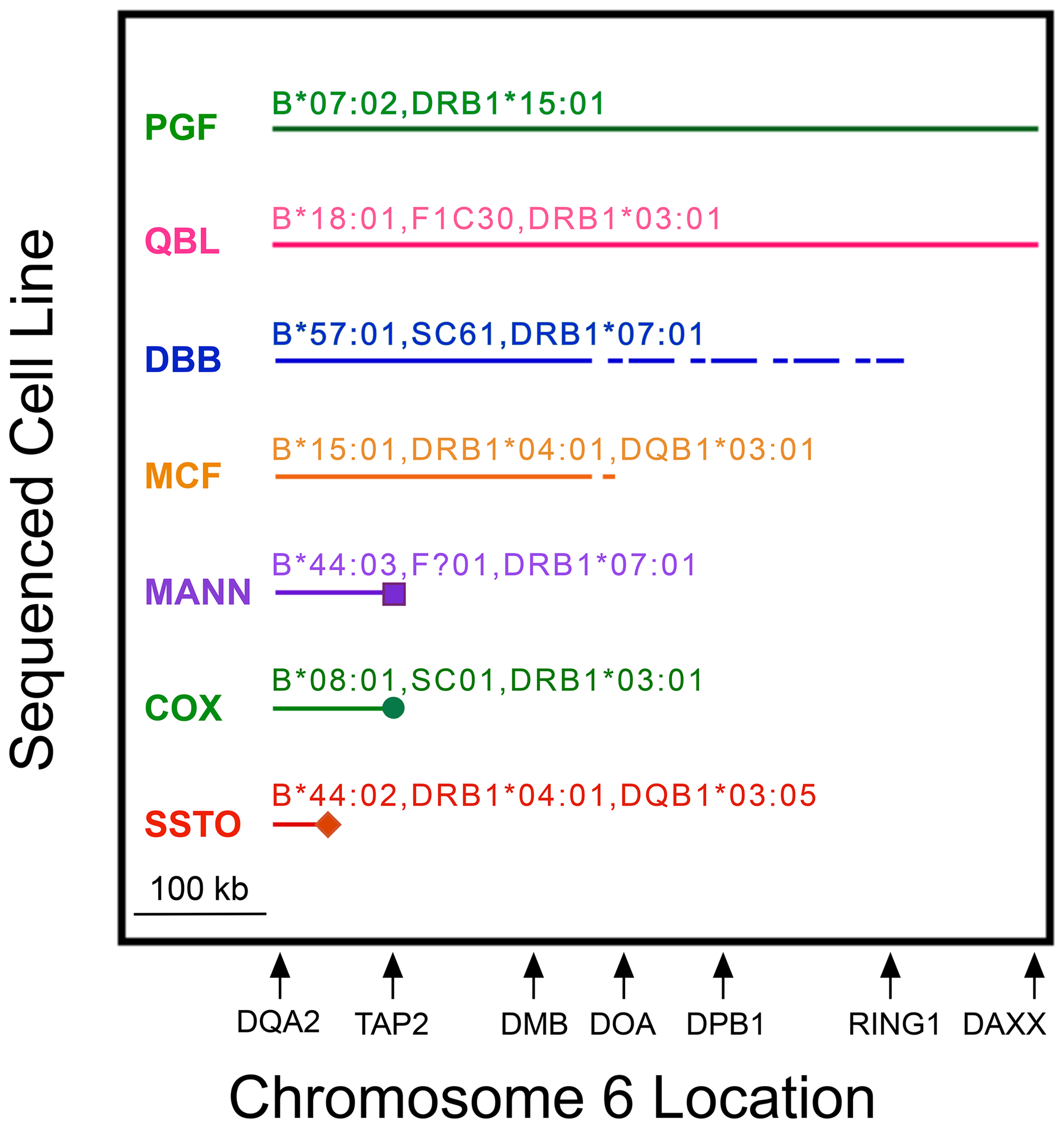MHP sequences represent CEHs to variable extents in MHC class II from <i>HLA-DQA2</i> to <i>DAXX</i>.