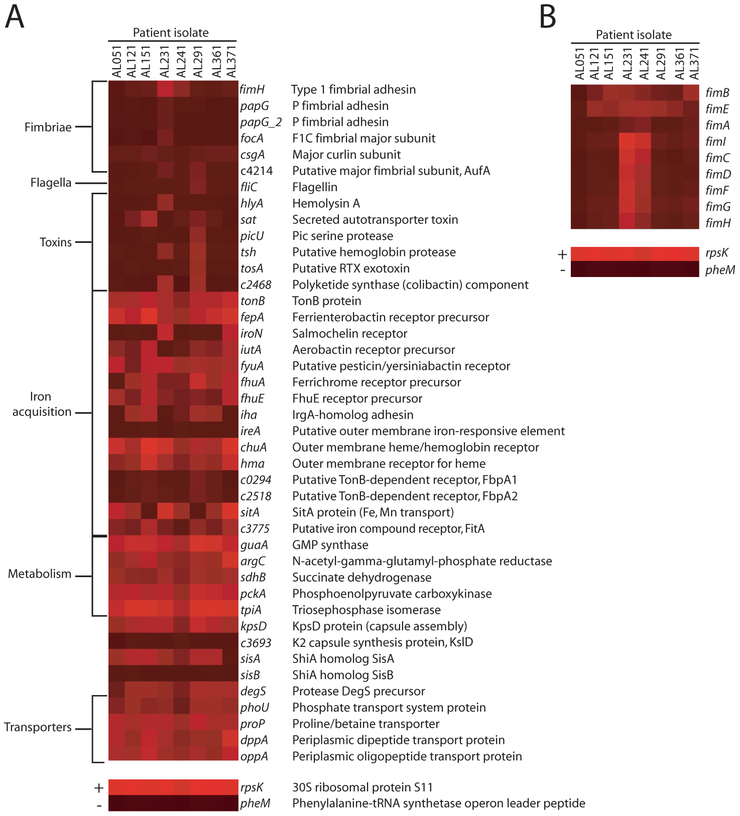 <i>E. coli</i> virulence factor expression in urines from UTI patients.
