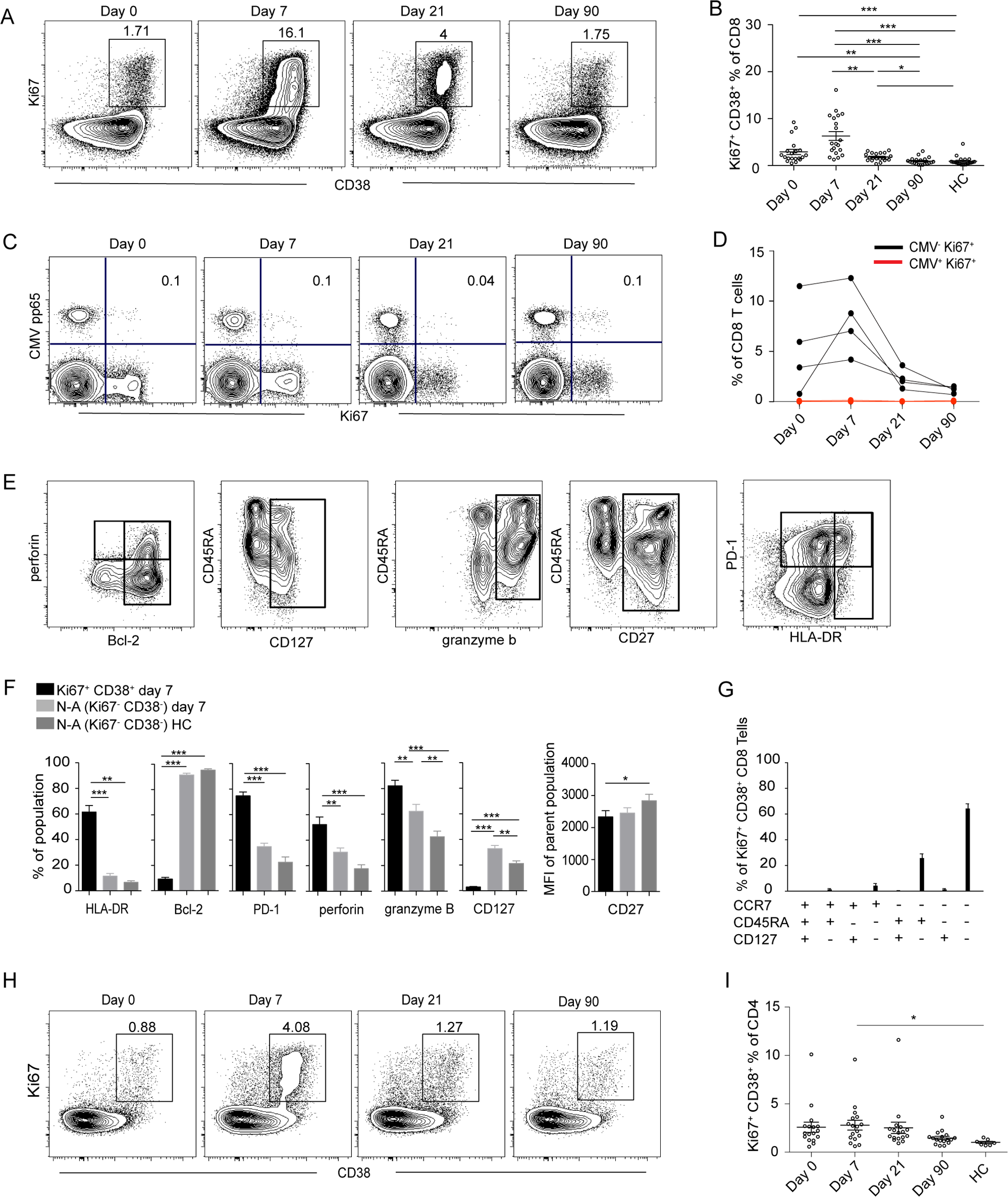 Activation of T cells in the acute phase of TBE infection.