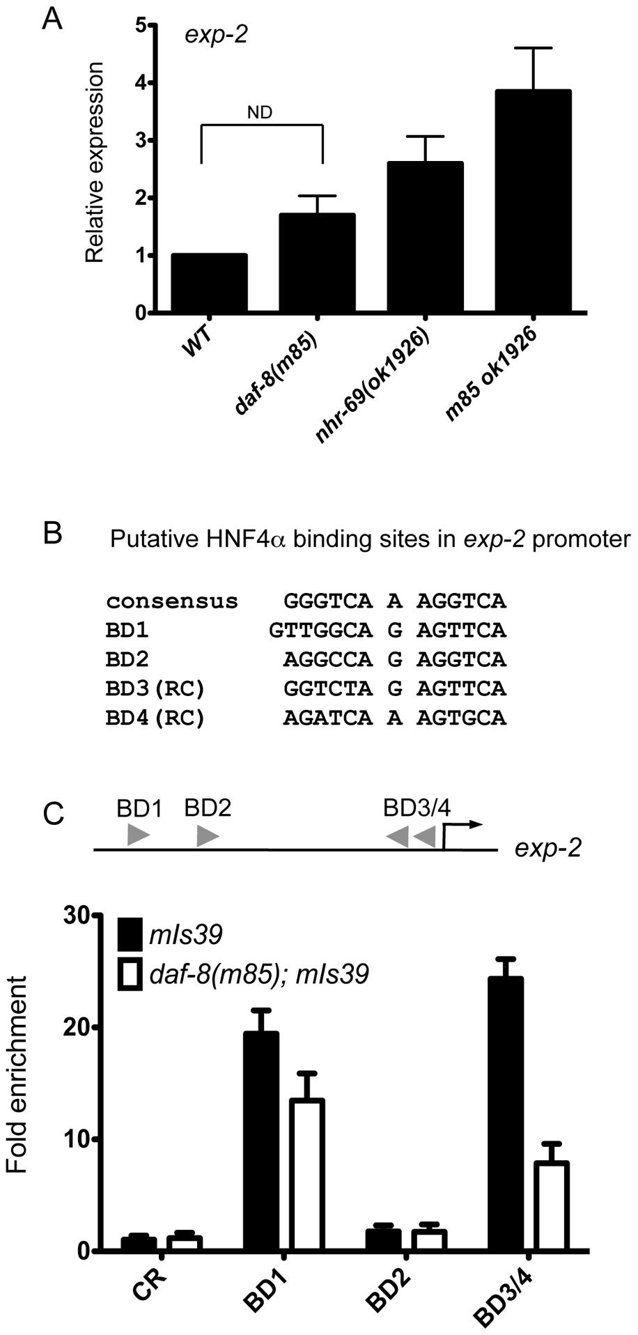 NHR-69 directly regulates <i>exp-2</i> transcription.