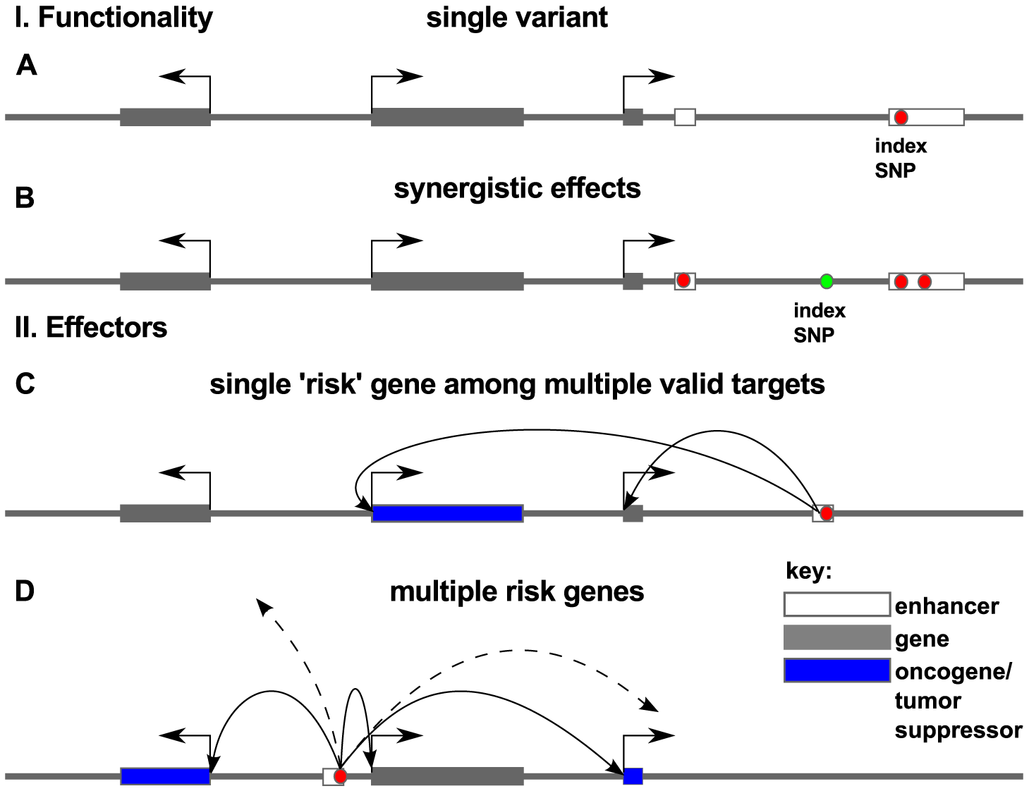 Models for association of risk with effector genes.