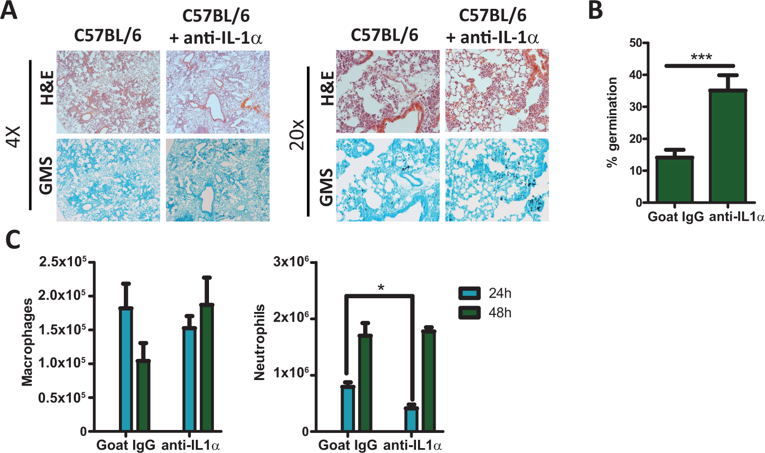 C57BL/6 mice treated with IL-1α neutralizing antibody were more susceptible to <i>Aspergillus fumigatus</i> infection.