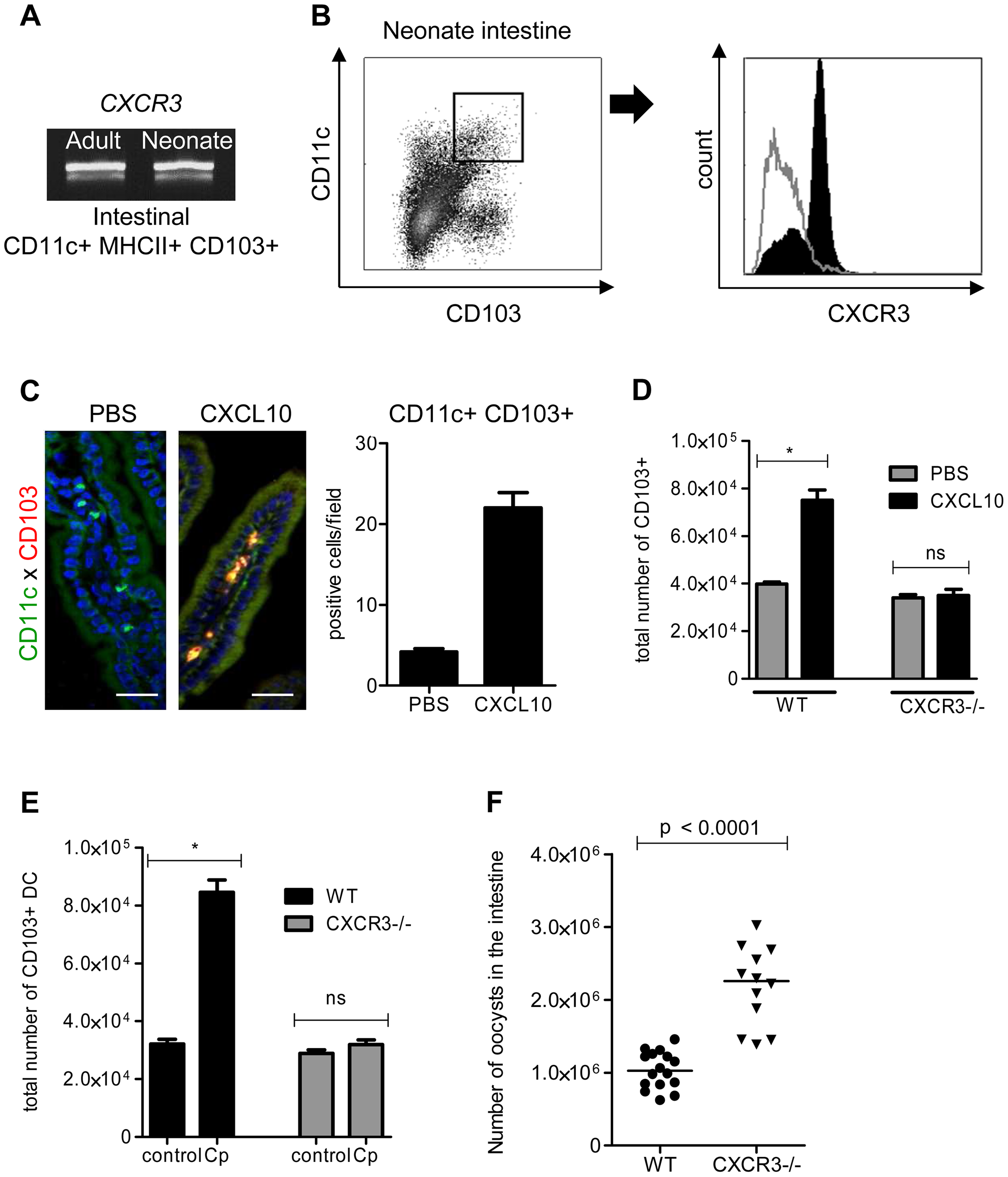 The chemokine receptor CXCR3 plays a major role in the recruitment of CD103+ DC during <i>C. parvum</i> infection.
