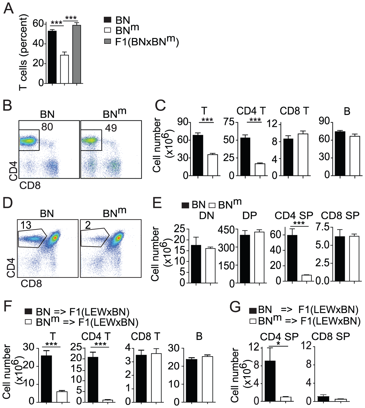BN<sup>m</sup> rats exhibit a T cell autonomous lymphopenia restricted to CD4 T cells.
