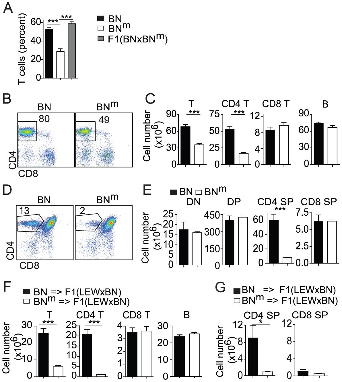 BN<sup>m</sup> rats exhibit a T cell autonomous lymphopenia restricted to CD4 T cells.