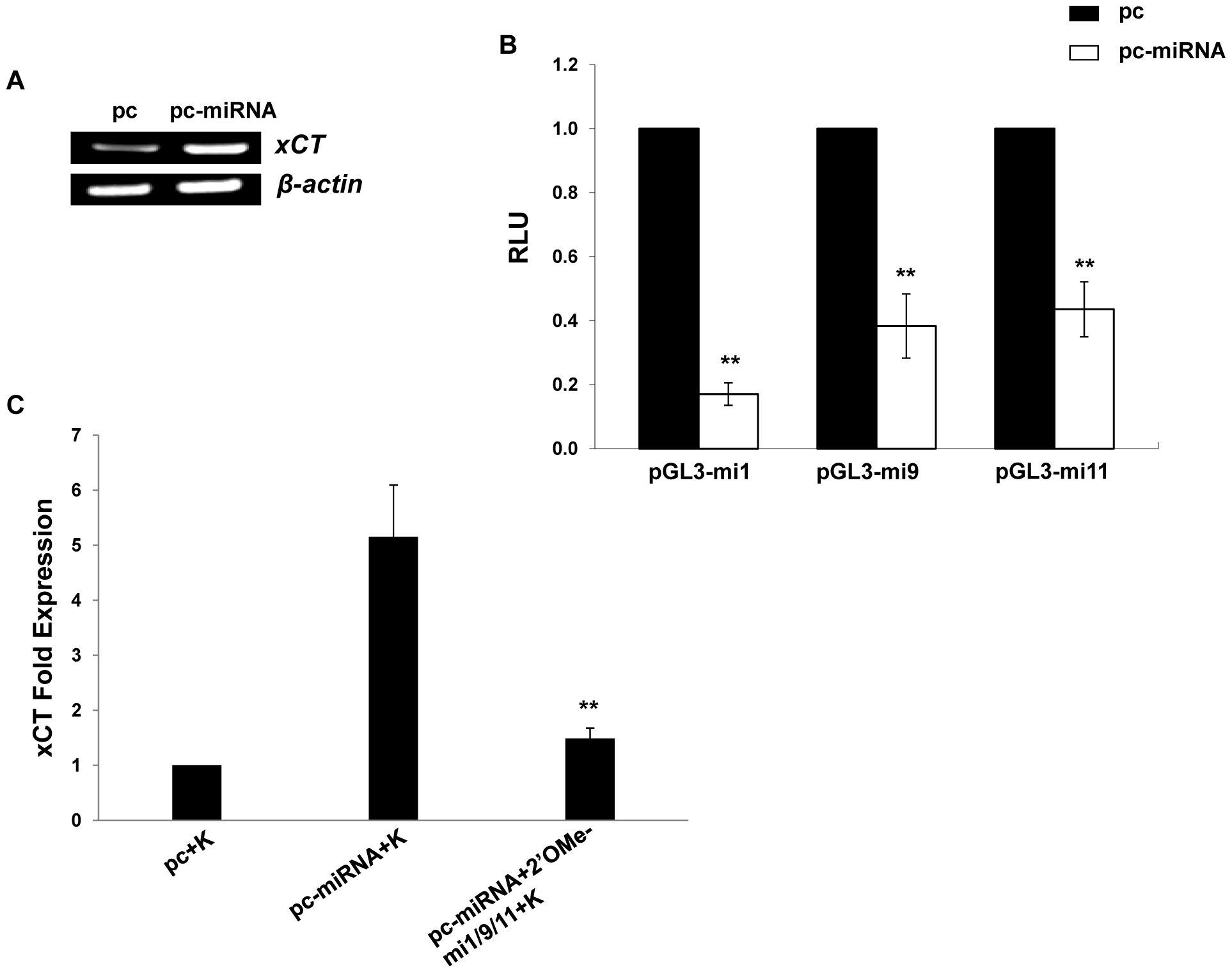 KSHV miRNAs upregulate xCT expression by macrophages.