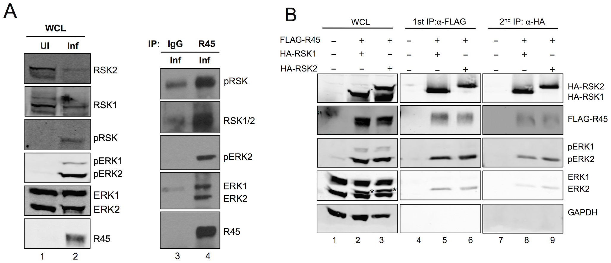R45 forms a complex with ERK and RSK.