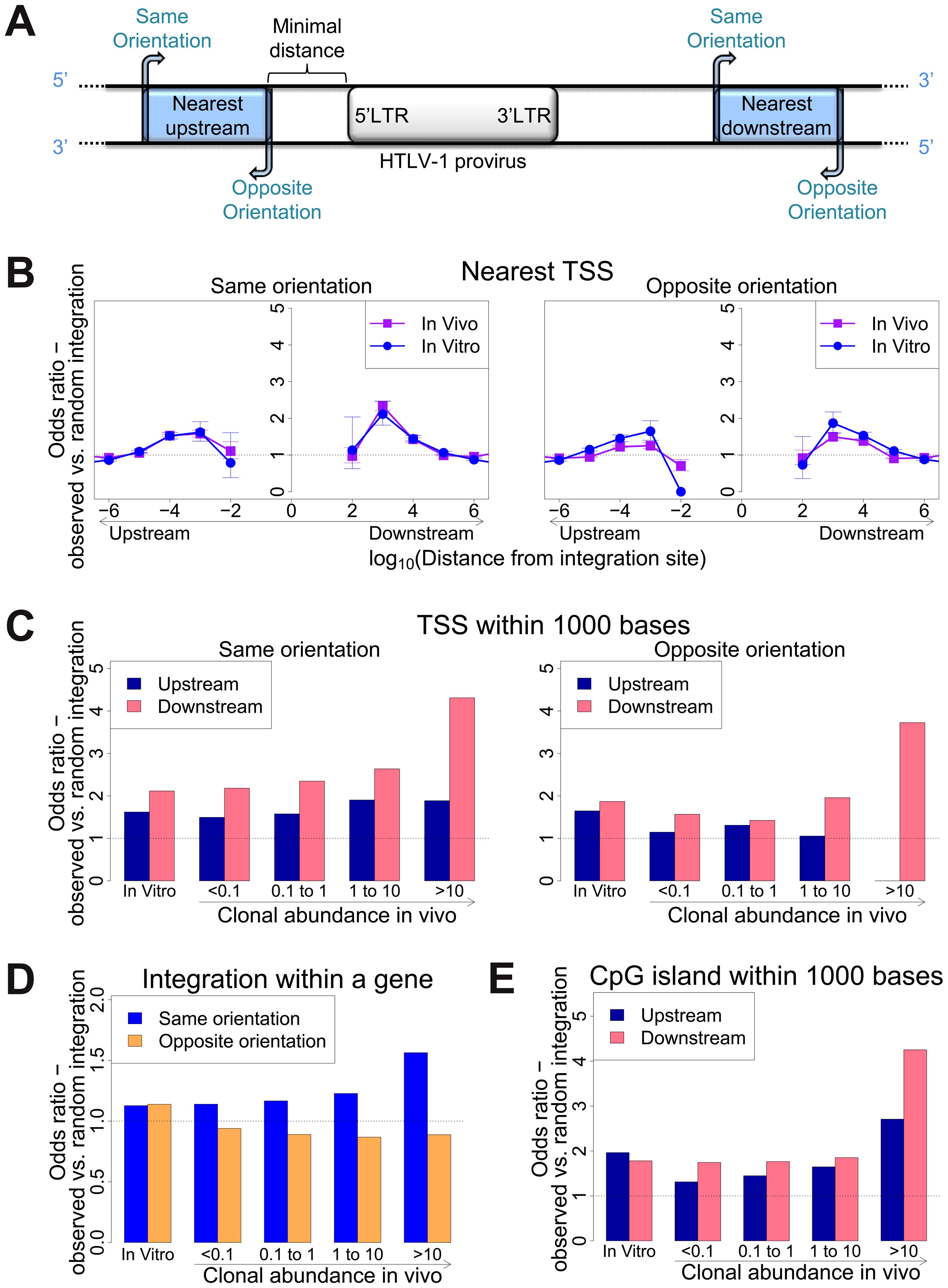 Genomic environment at HTLV-1 proviral integration site determines integration in vitro and abundance in vivo.