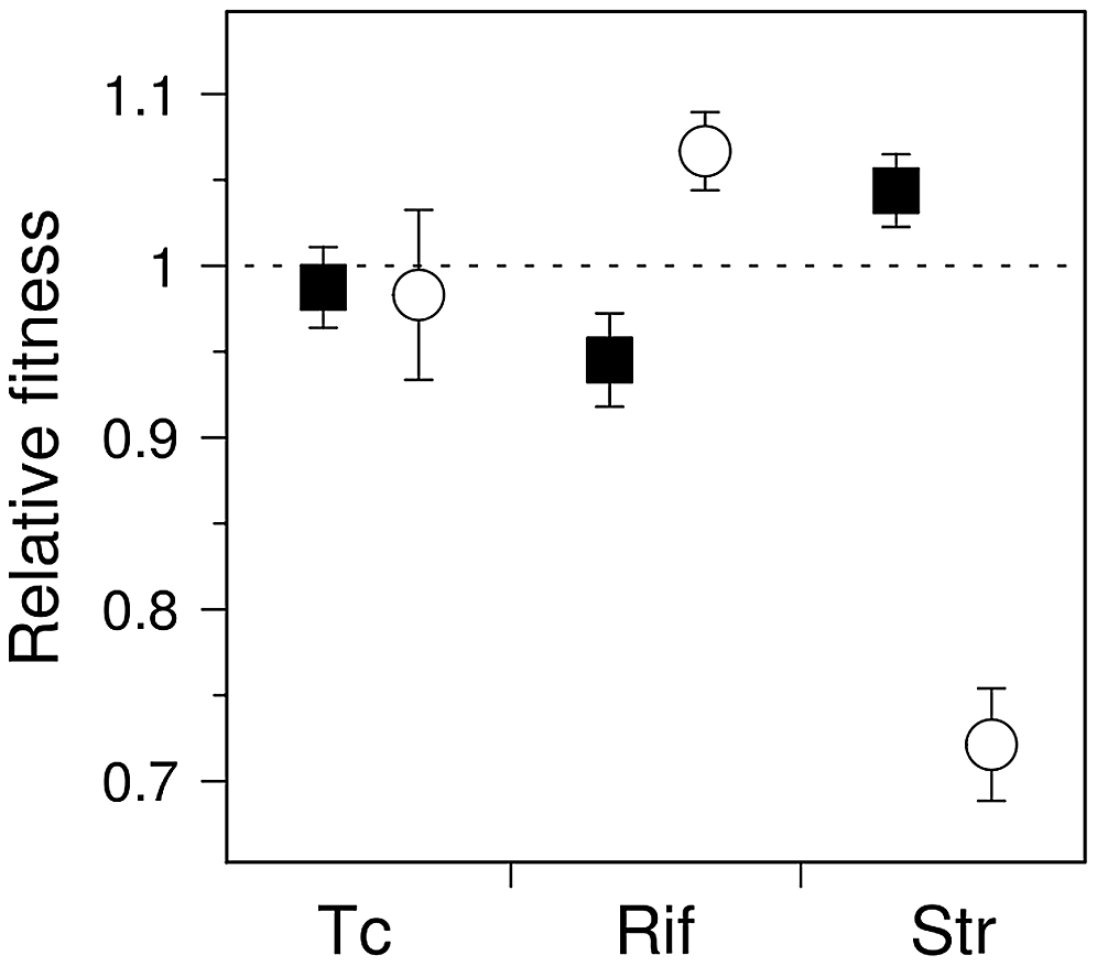 Competition experiments for antibiotic-resistant mutants of wild-type and mutator <i>E. coli</i>.