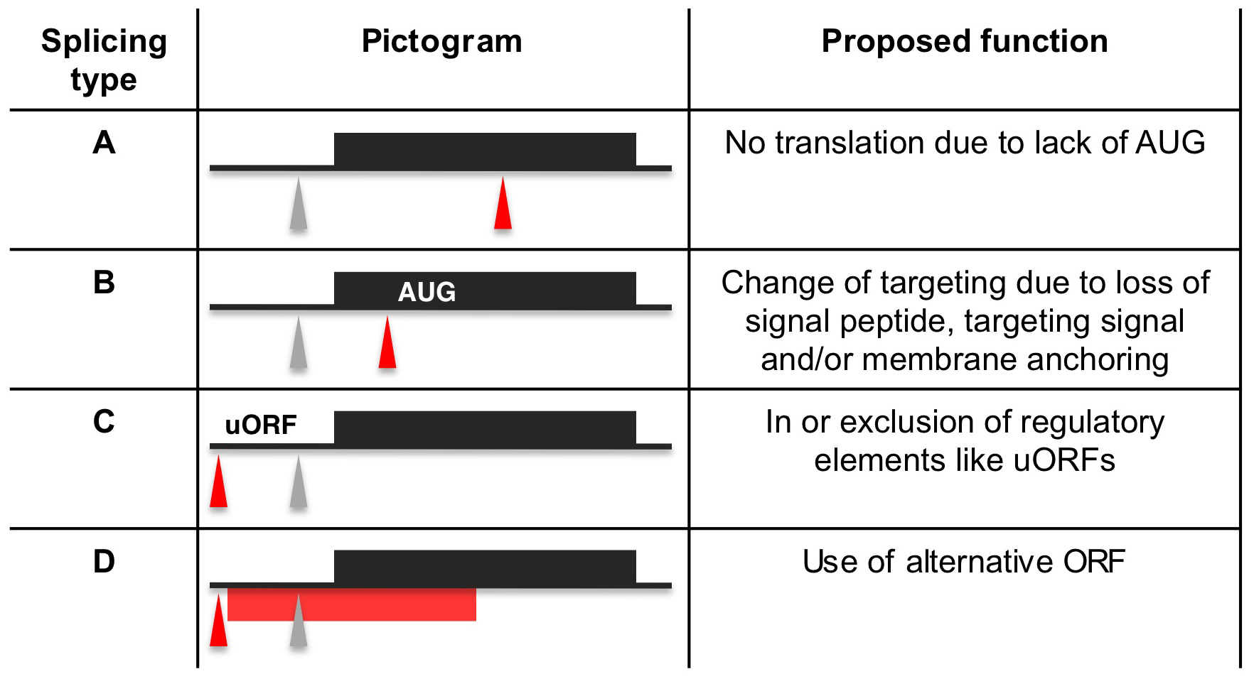 Proposed functions for alternative splicing variants.
